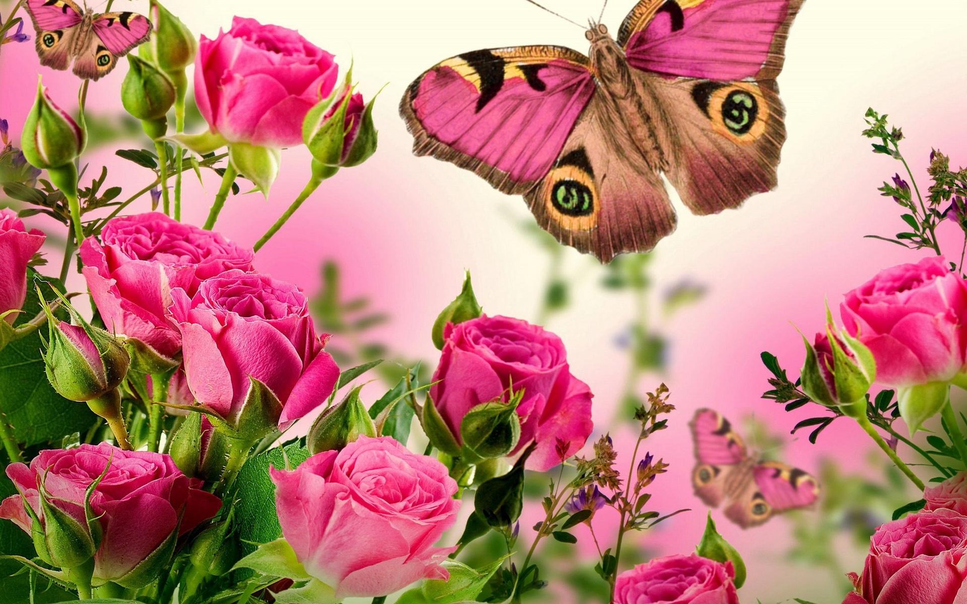 Открытки бабочки розы, картинки надписями