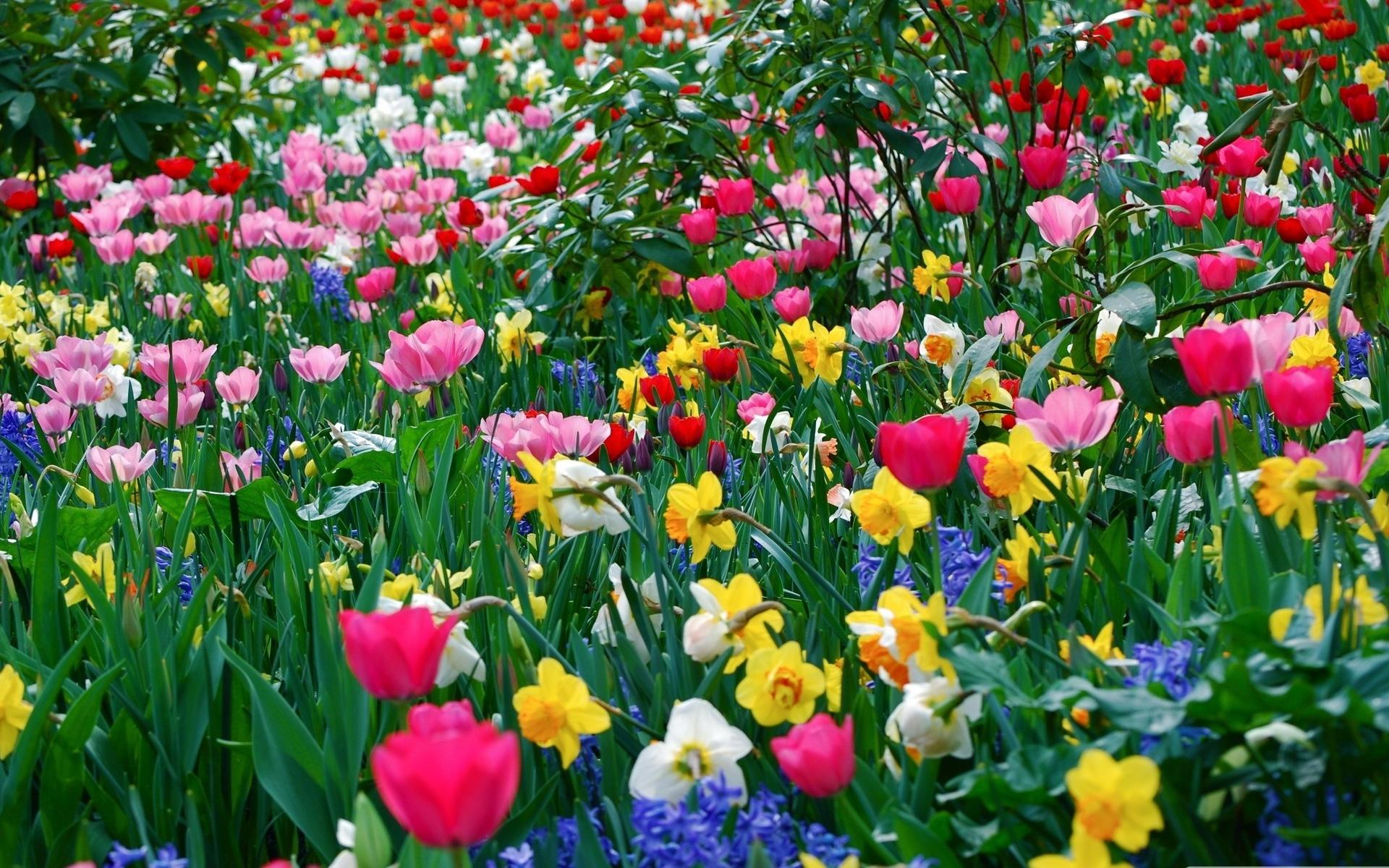 Поляна с цветами картинки