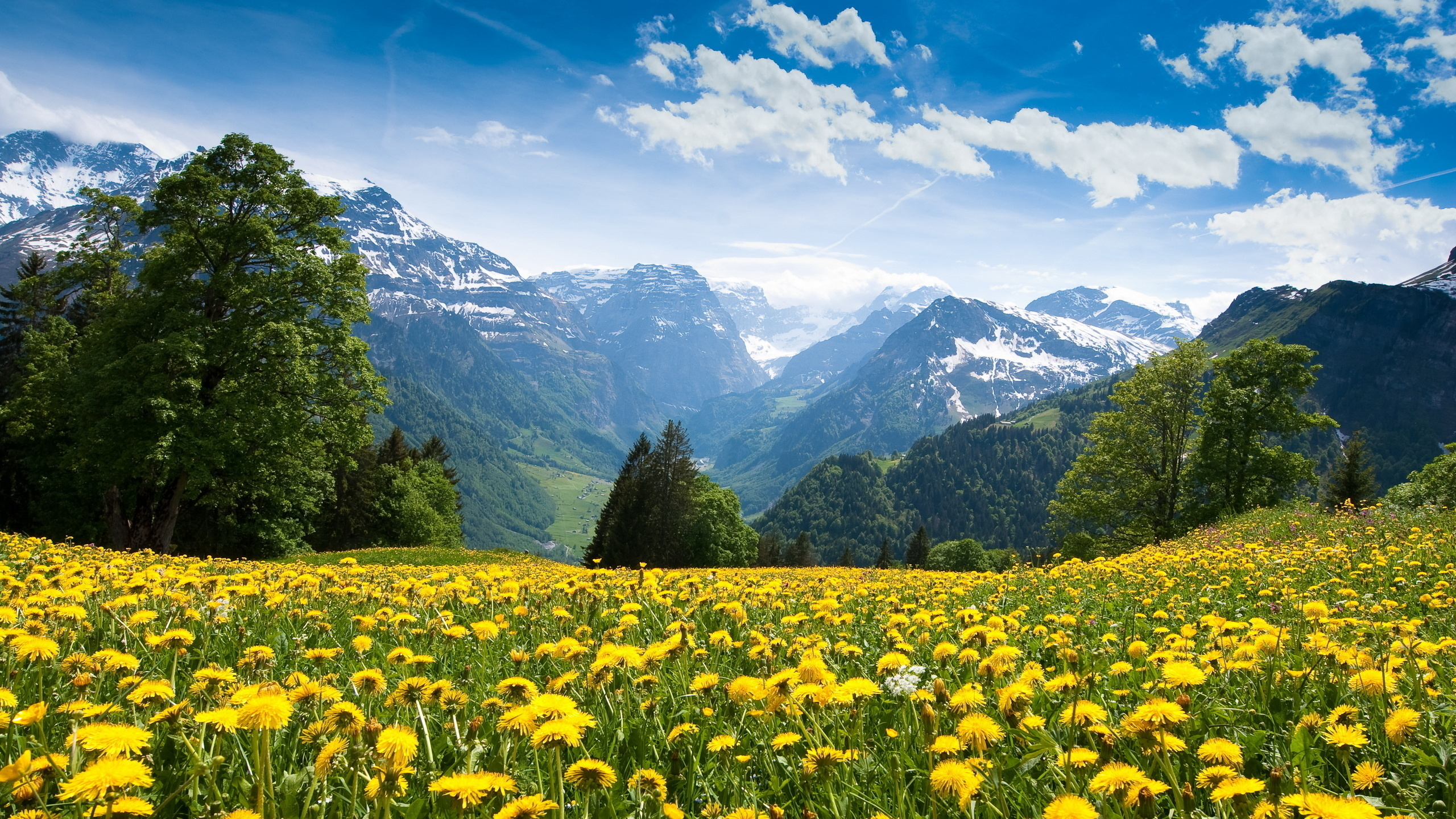 Первым, картинки горы и цветы красивые