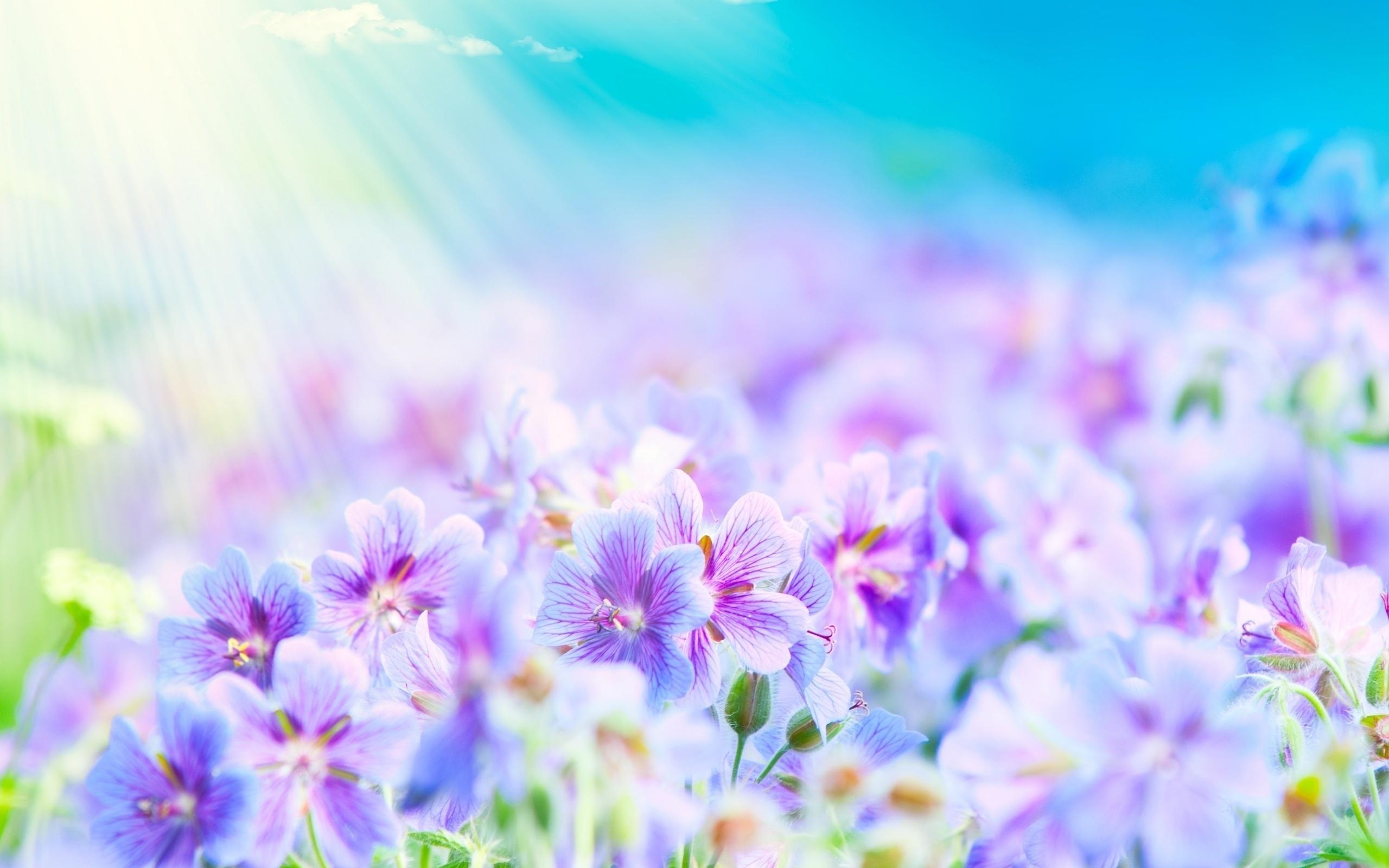 Мир, фон весенней открытки