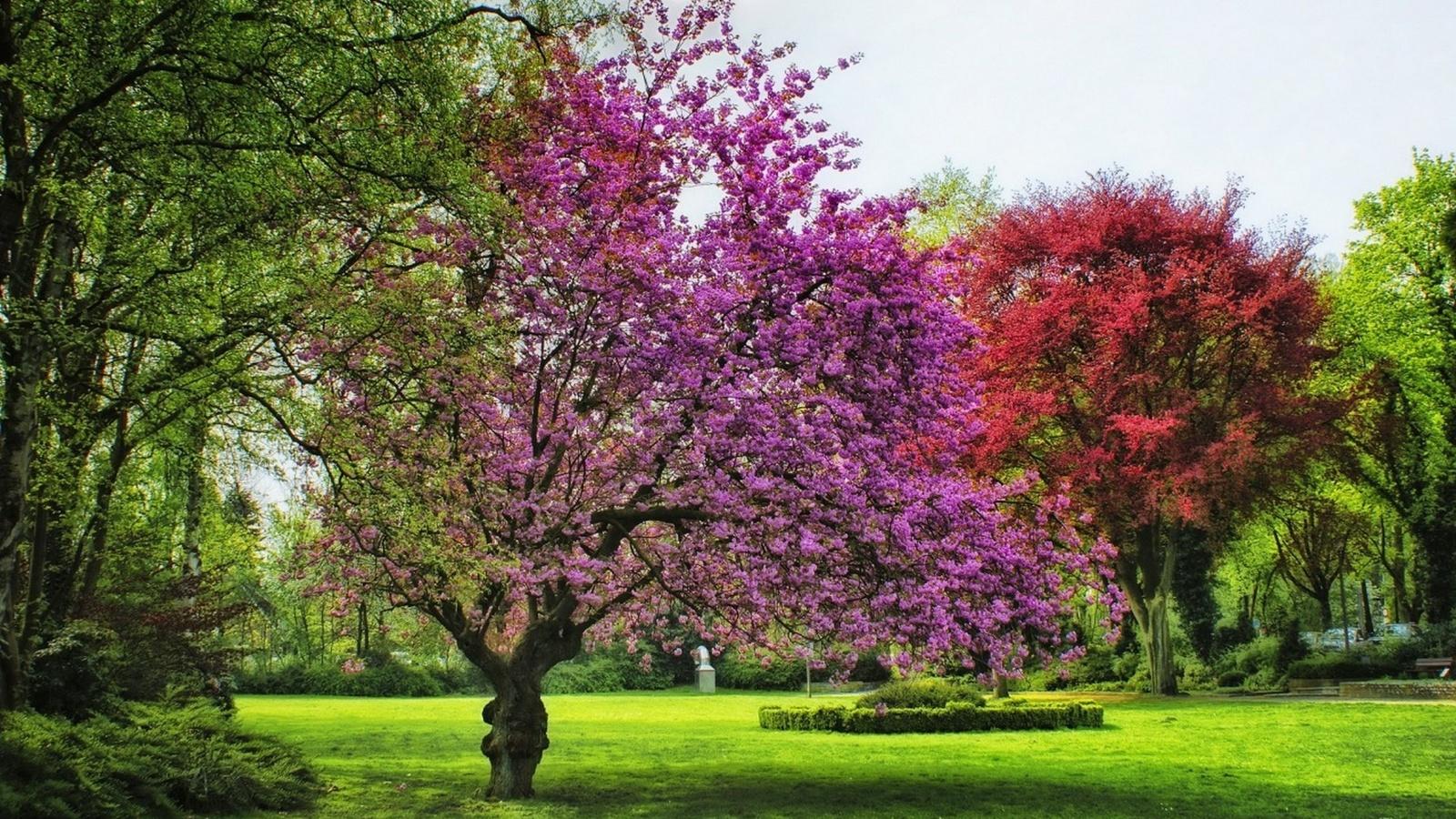 германия, парк, ahlen, деревья, трава, природа, пейзаж