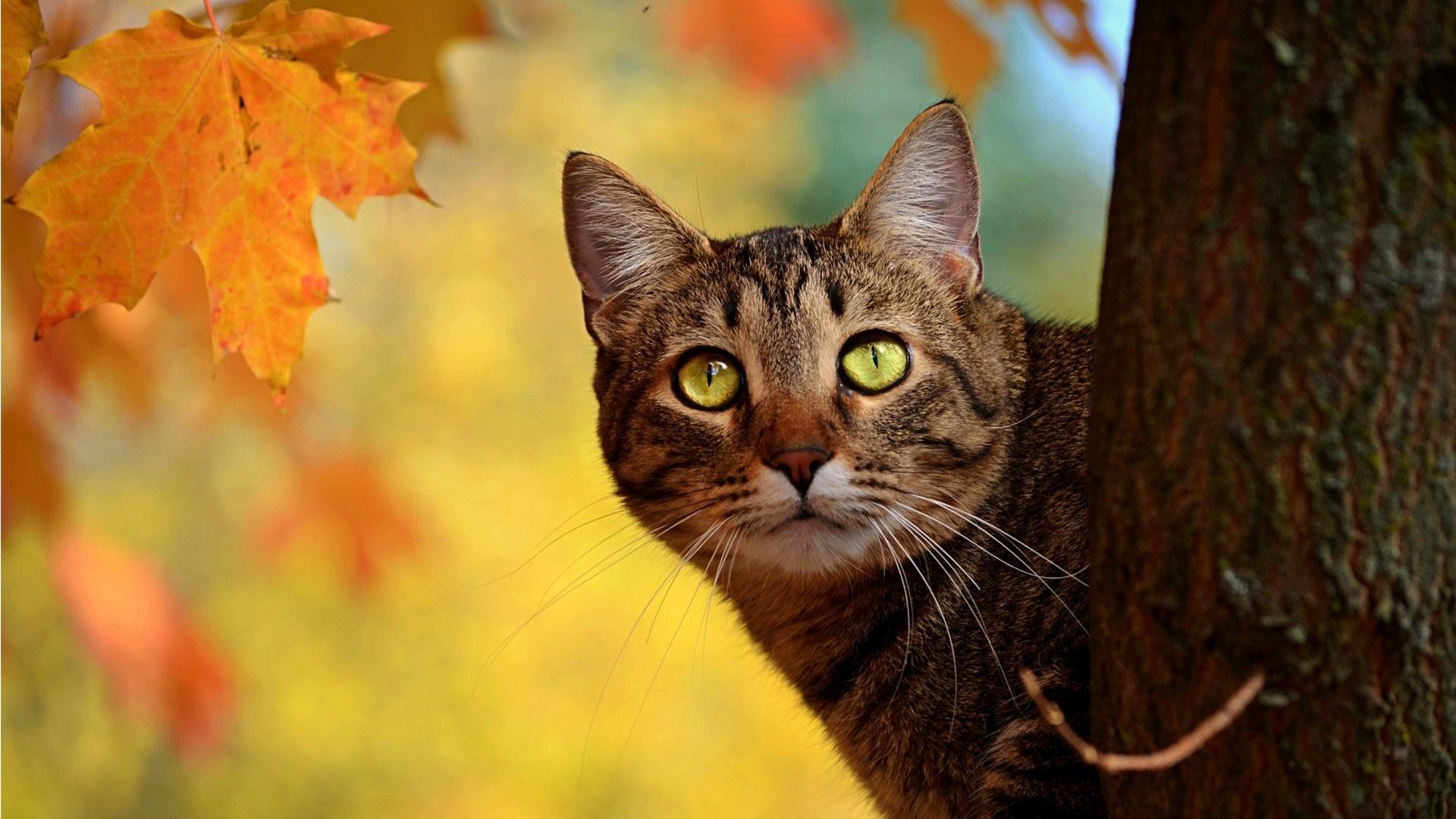 Котиком, прикольные картинки на рабочий стол осень