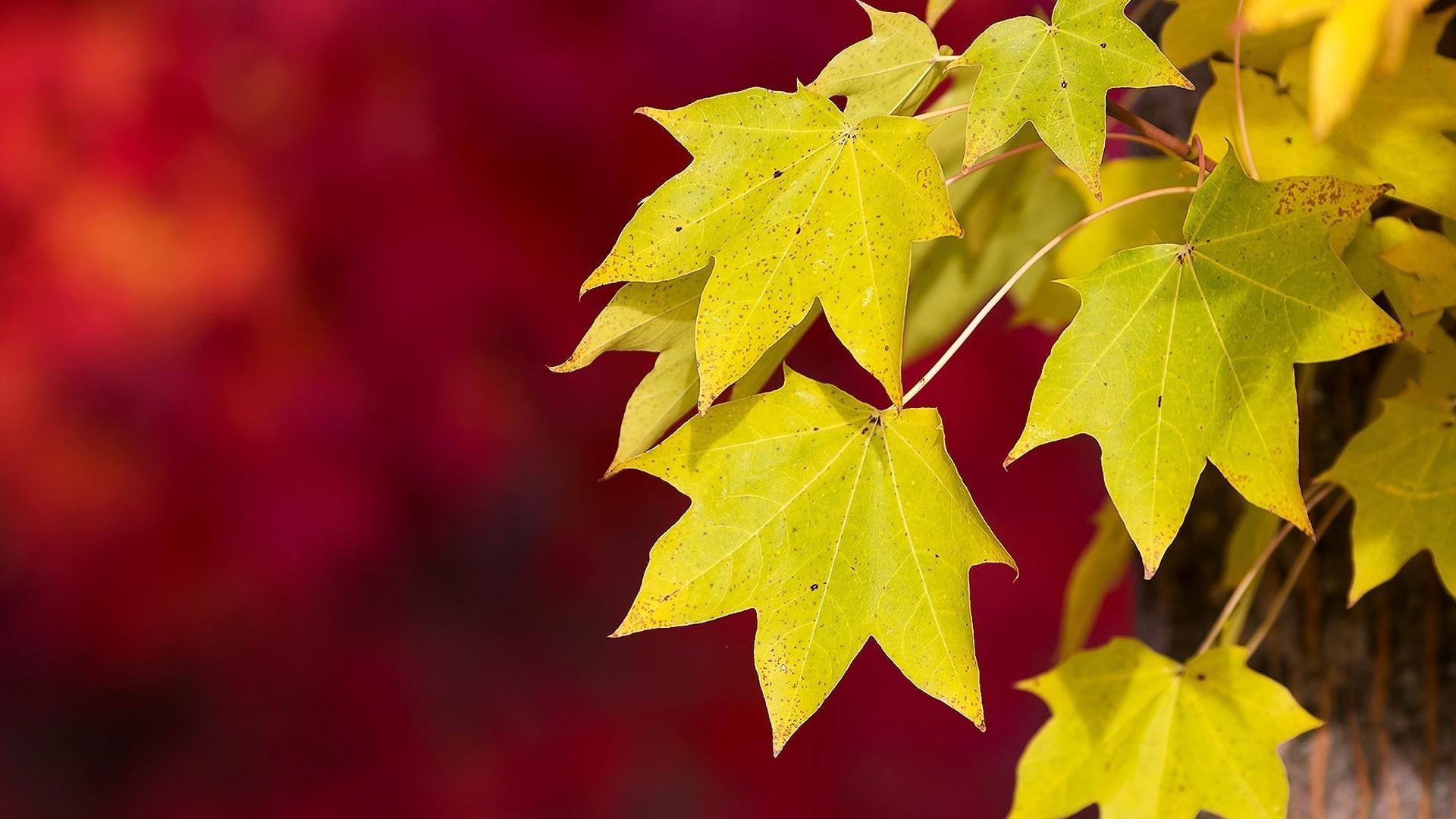 картинки осень листья большие этой фотке обкончайте