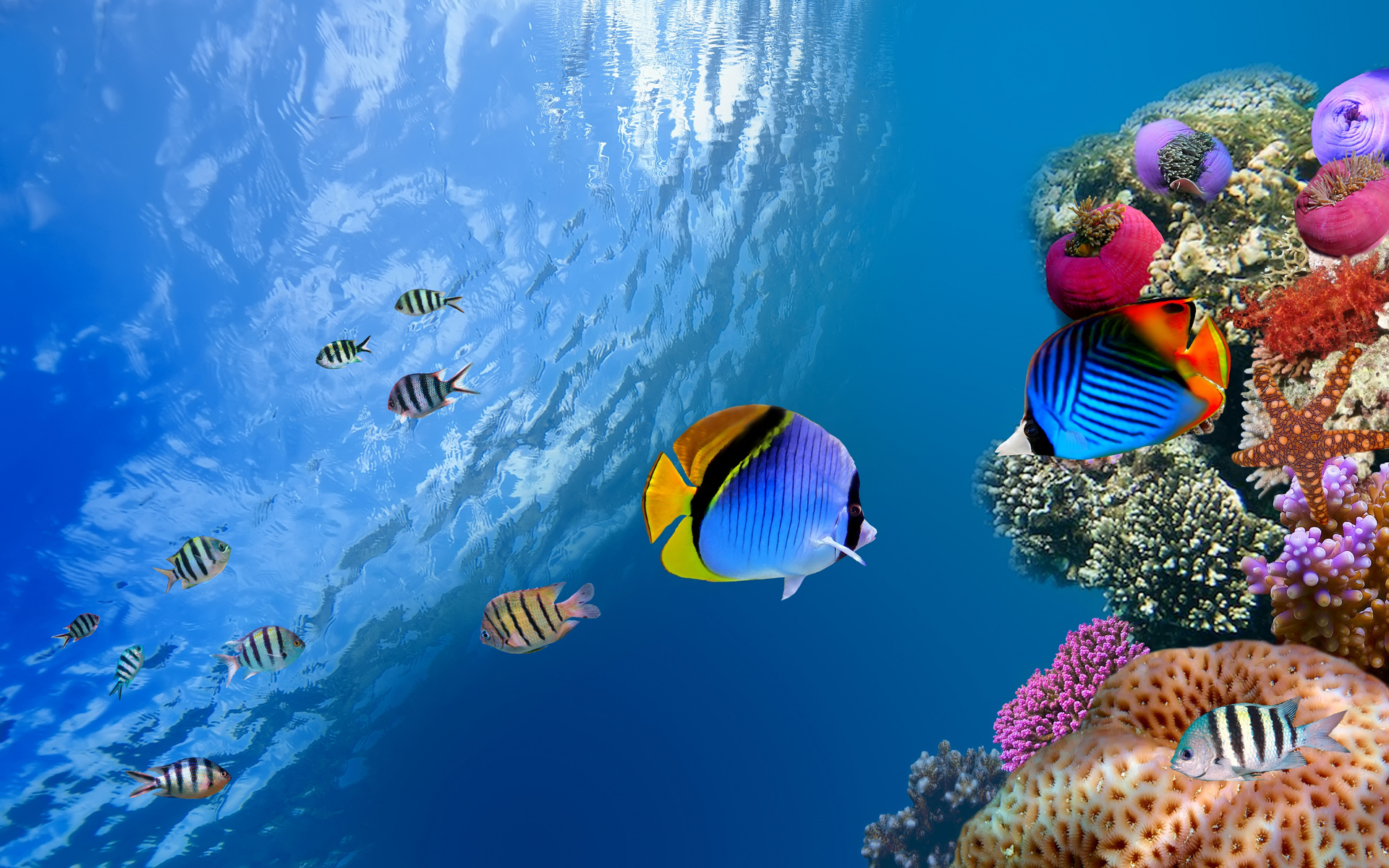 признателен, если фотообои морские обитатели того