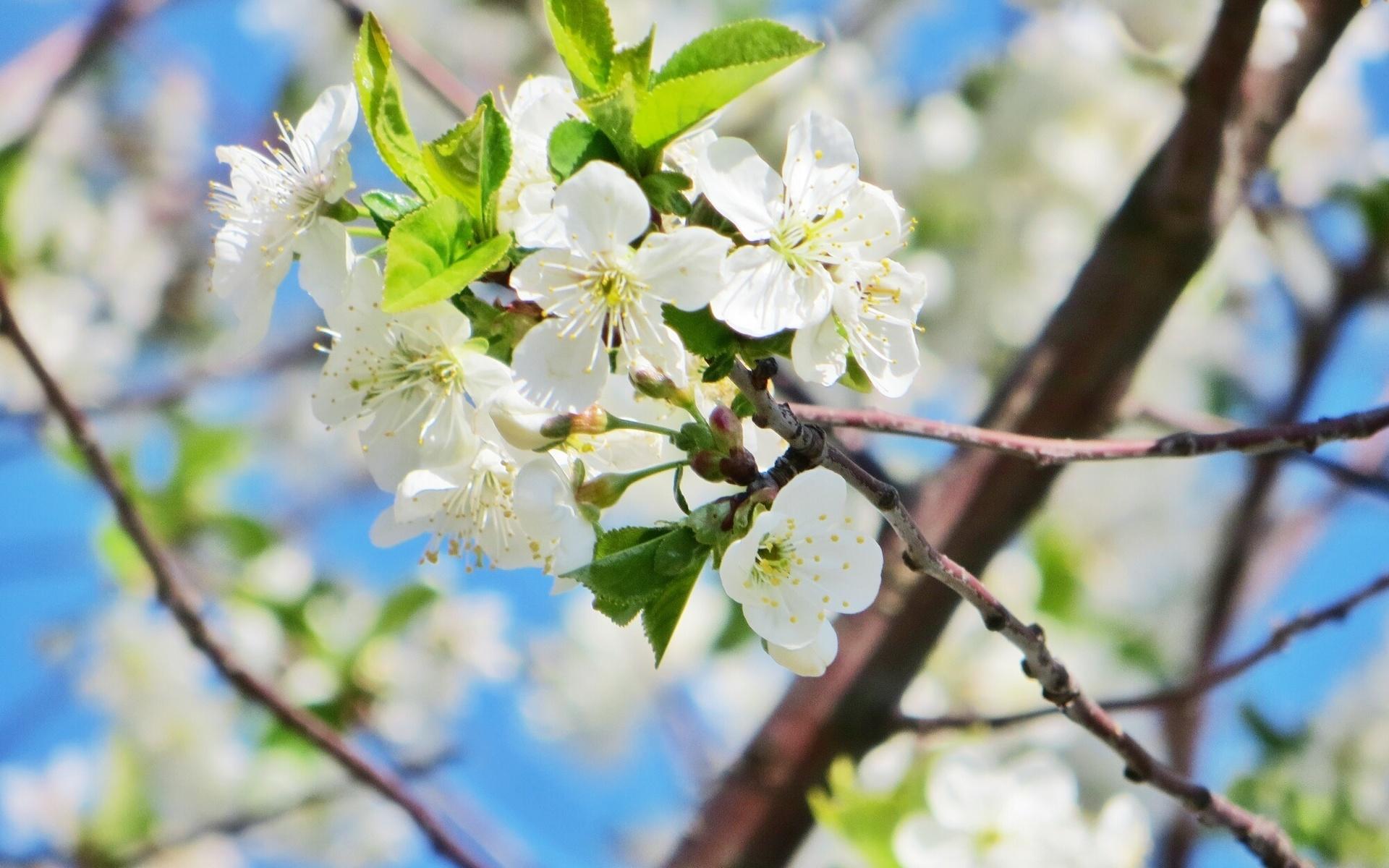 Красивая открытка природы солнце весна, картинки про школу