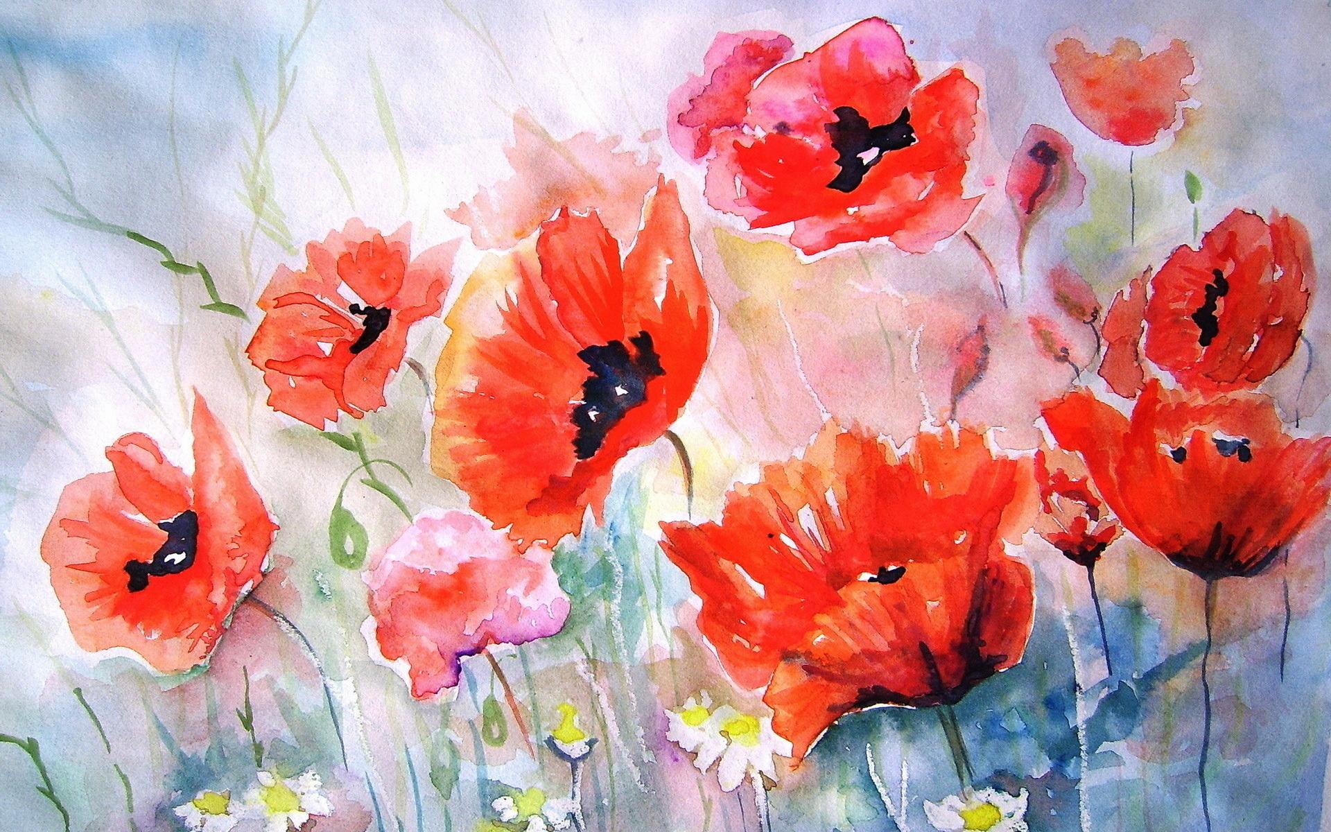 Цветы маки картинки нарисованные, своими