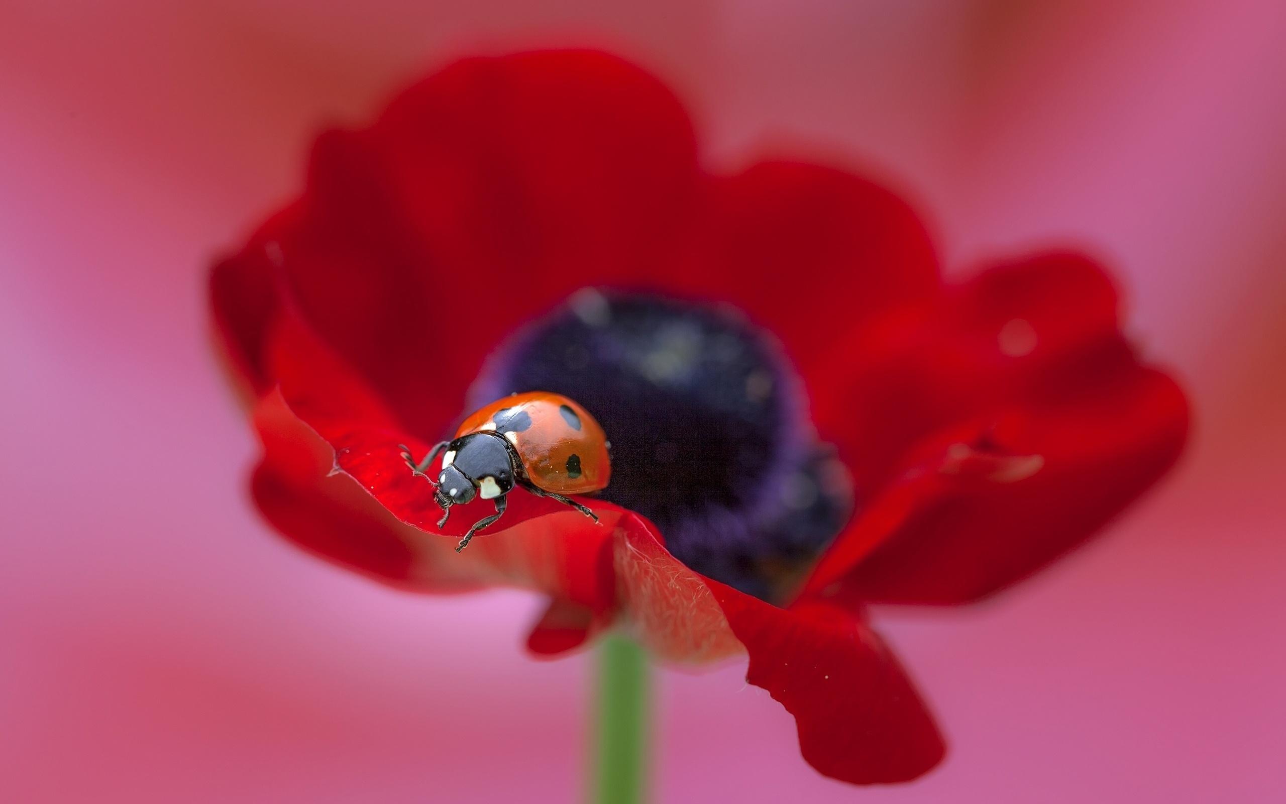 Открытка божья коровка на цветке