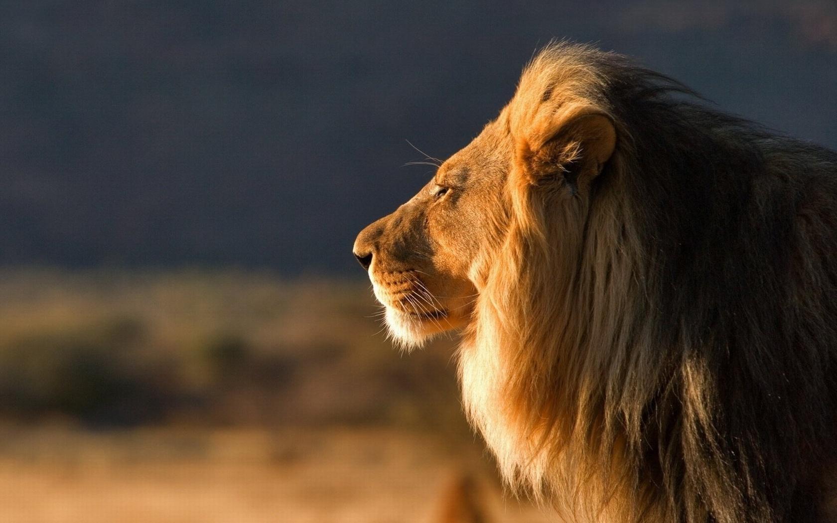 Фото открытки лев, надписями приходите гости