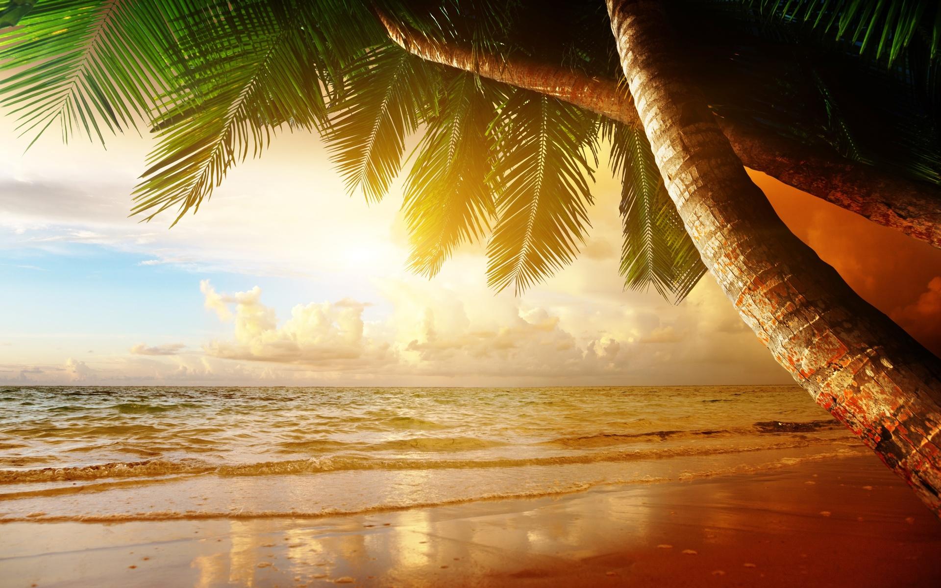 Картинки пальмы море солнце, открытки днем рождения