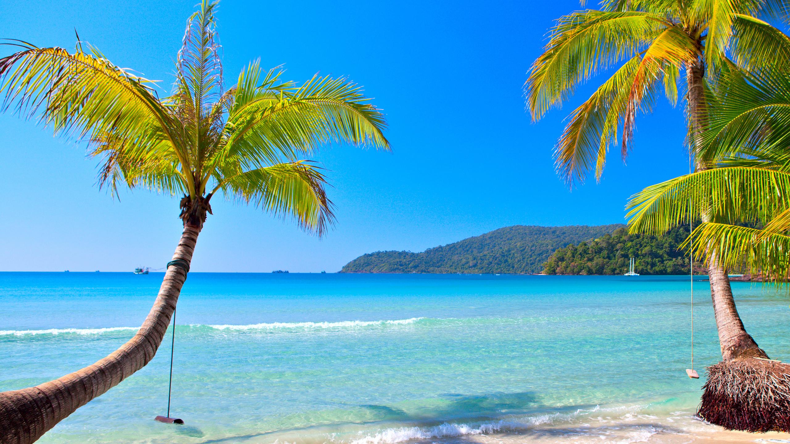 ней берег океана с пальмами фото исторических