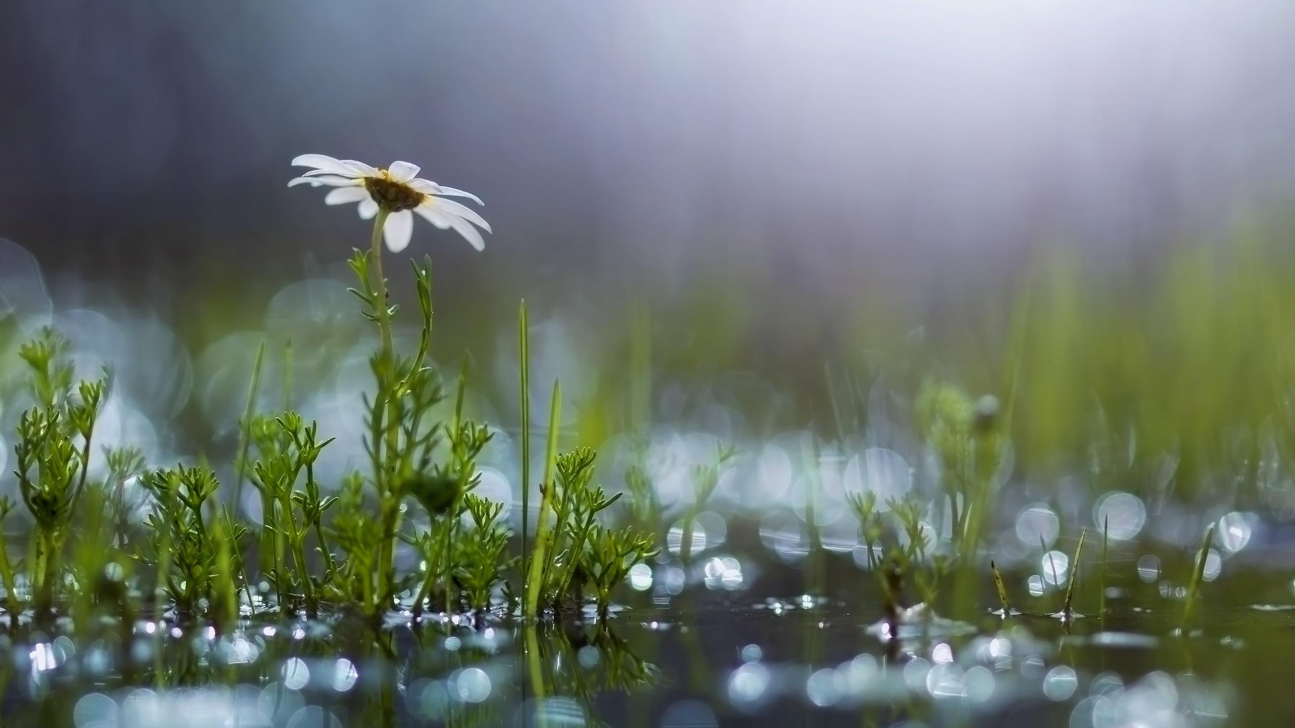 лето одного дождя