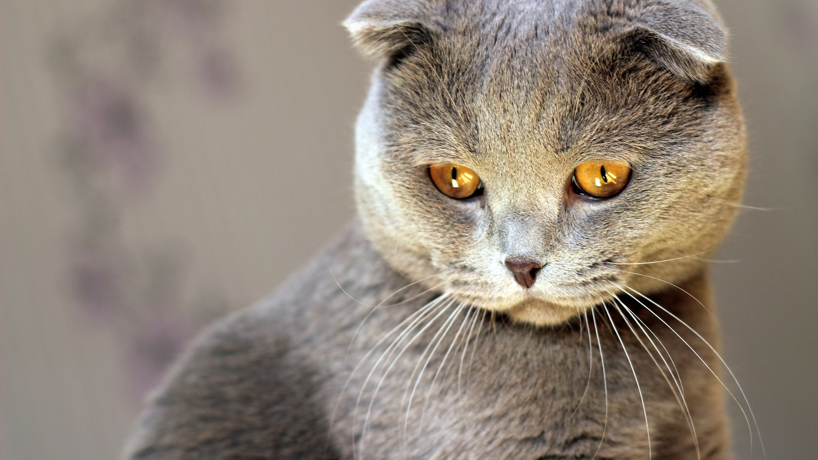 Фотографии кошек картинки, как бабушки