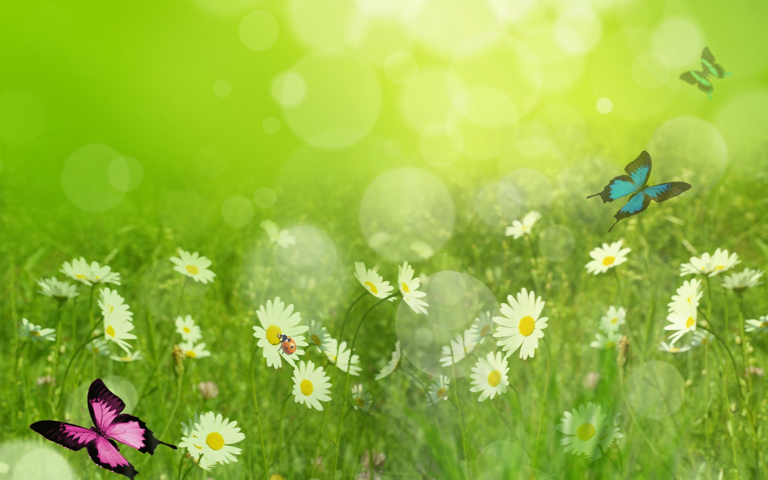 Фоновые картинки лета