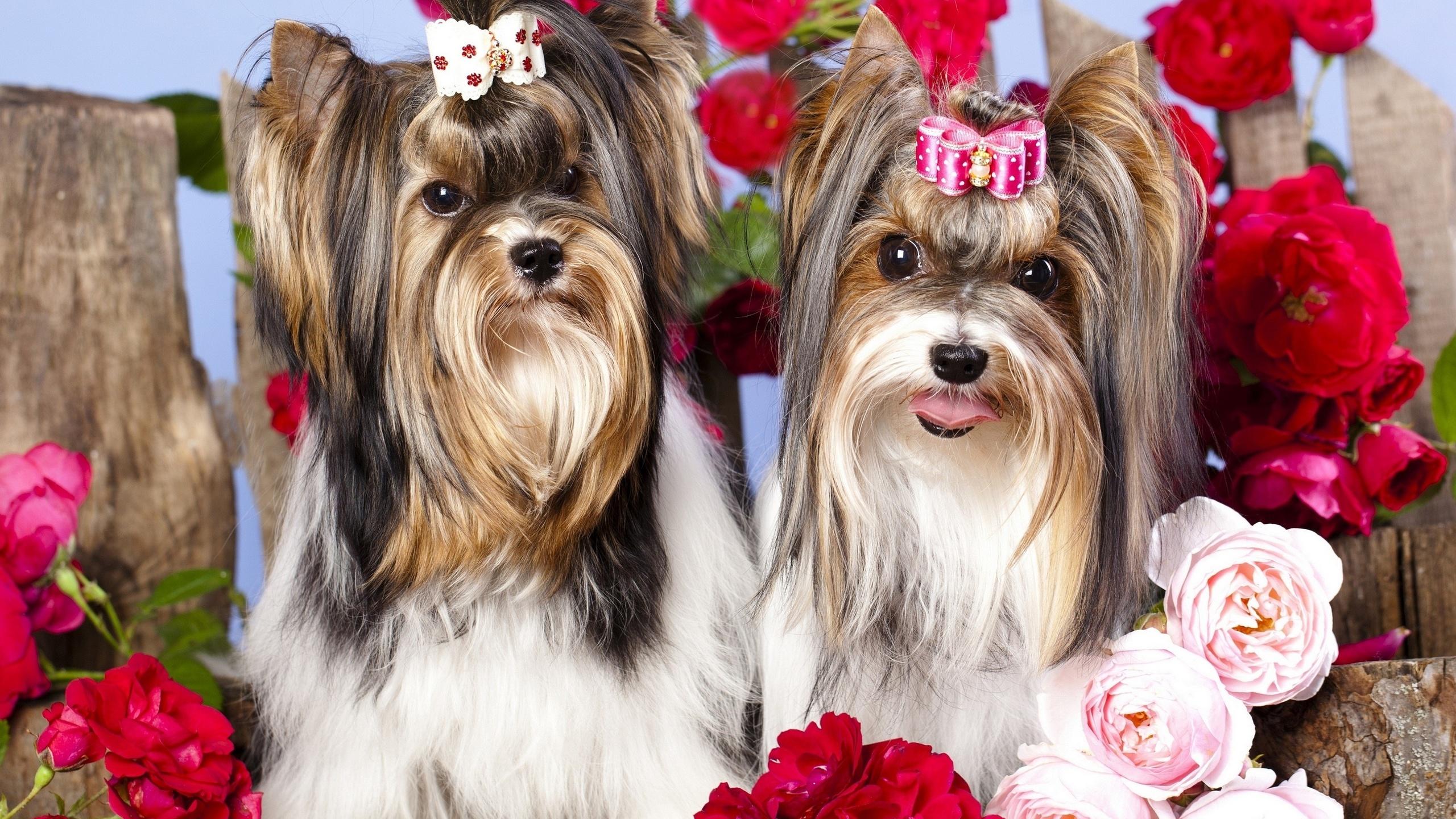 Фон, собаки с цветами картинки