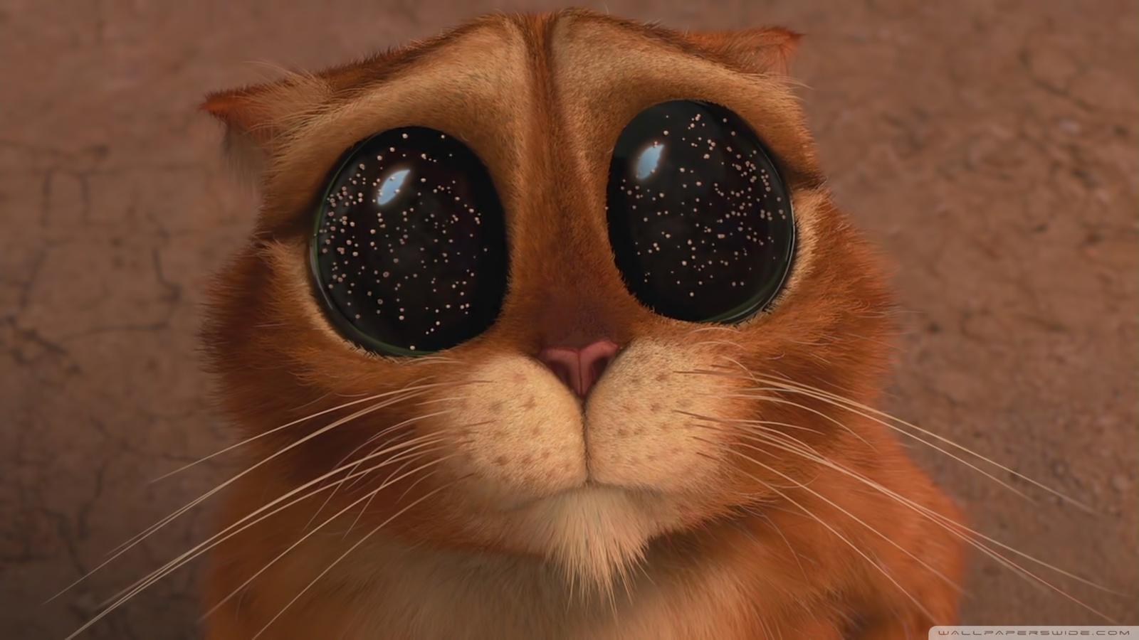 Прикольные картинки кота из шрека