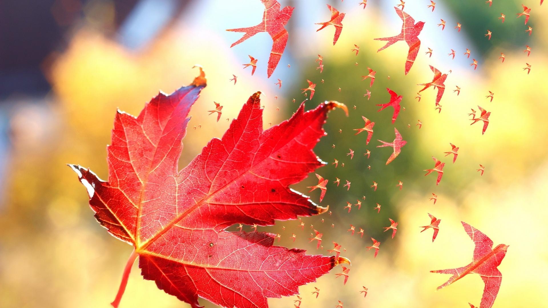 Летящие осенние листья картинки