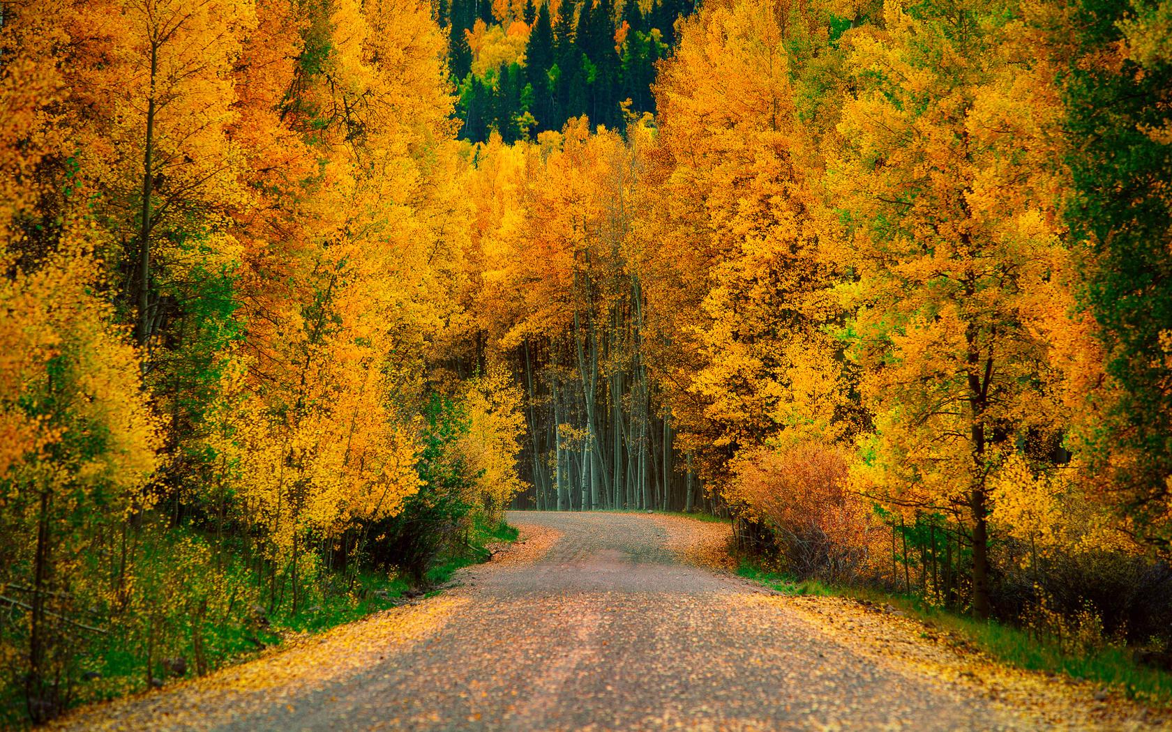 год сюда картинки осеннего леса высокое разрешение последнем звонке