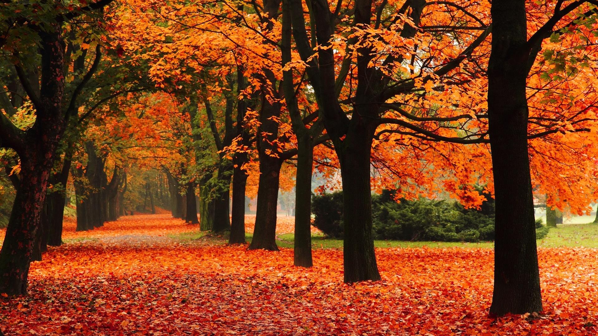 Картинки про осень из, под
