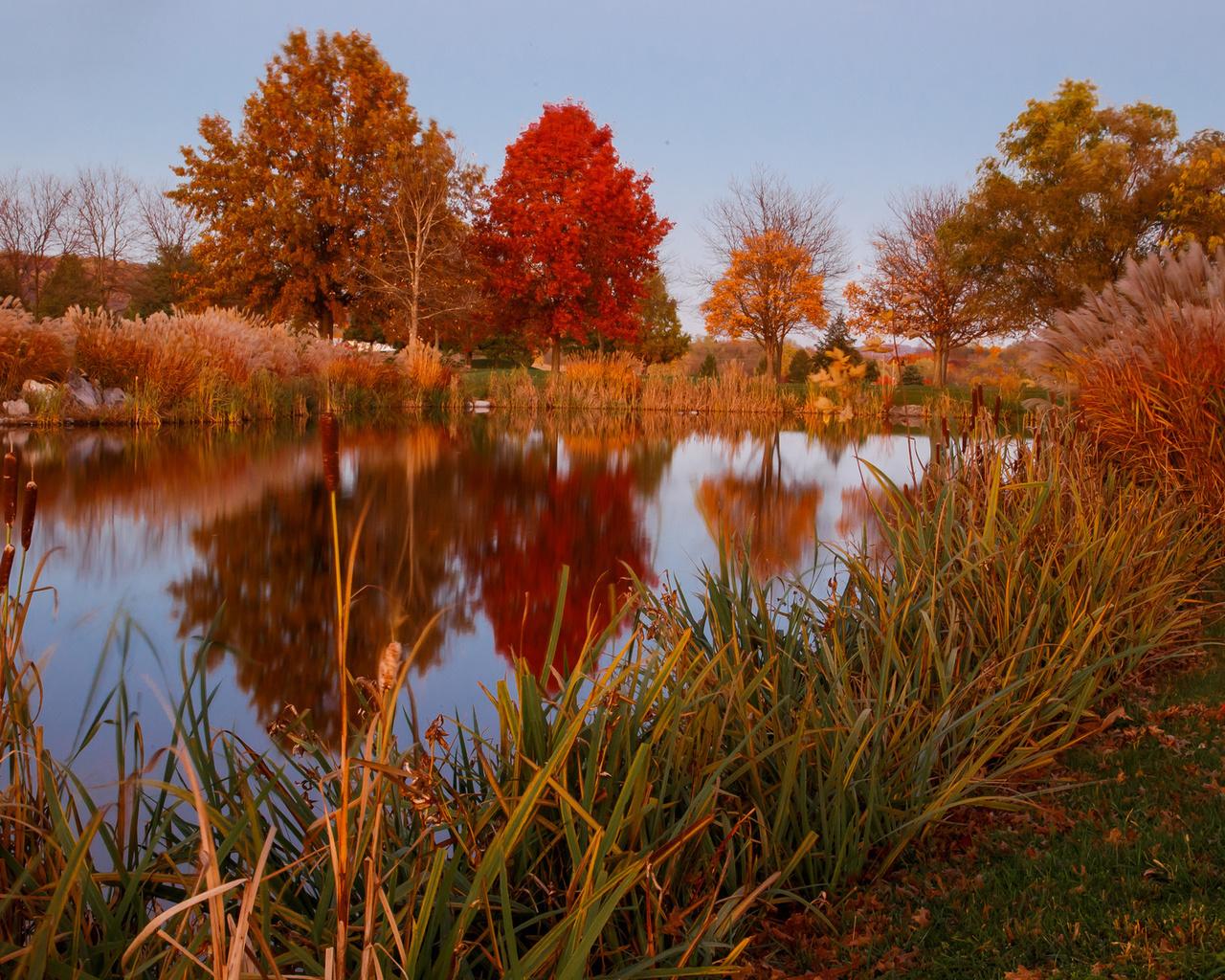 природа, осень, пруд, озеро, камыш, отражение