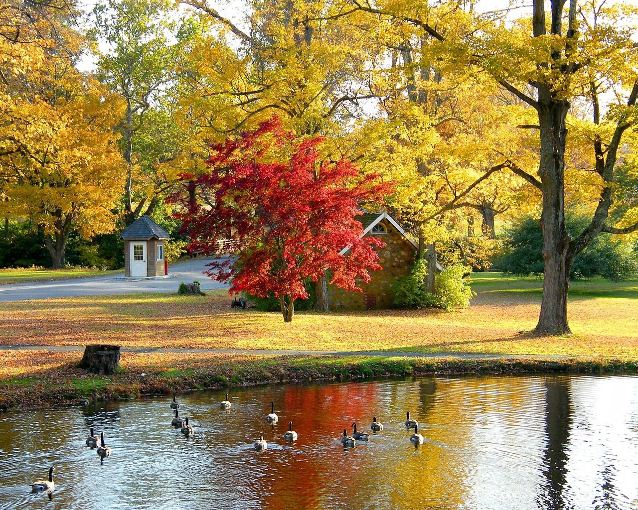 природа, осень, парк, домик, пруд, гуси