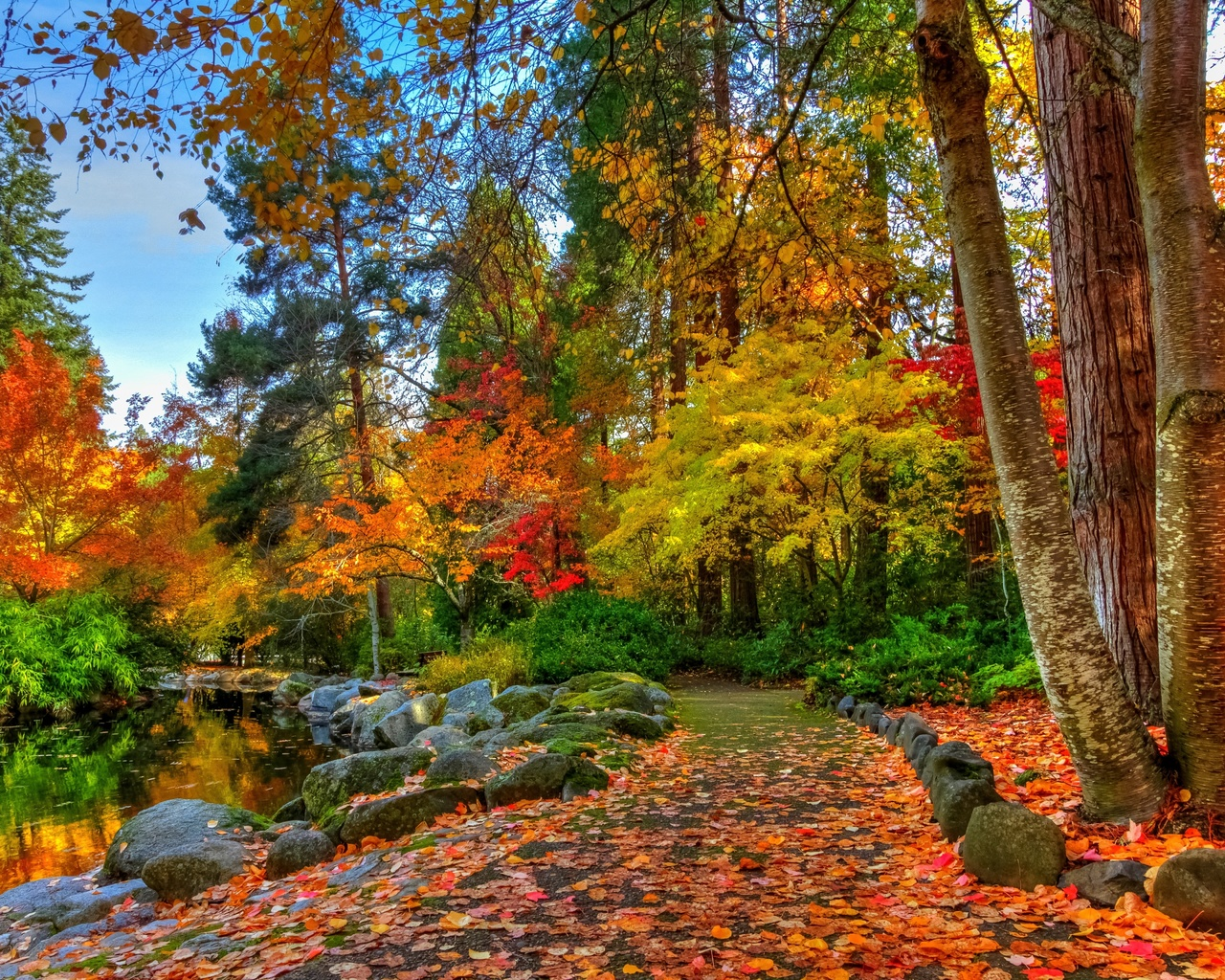 осень, парк, деревья, пруд, камни, дорожка, небо, природа