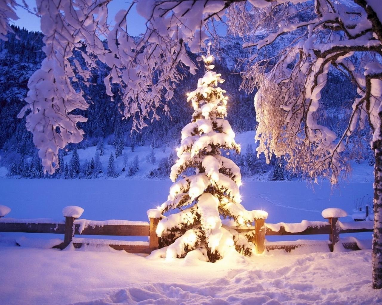сейчас фото сказочный лес под новый год деньги стремительно