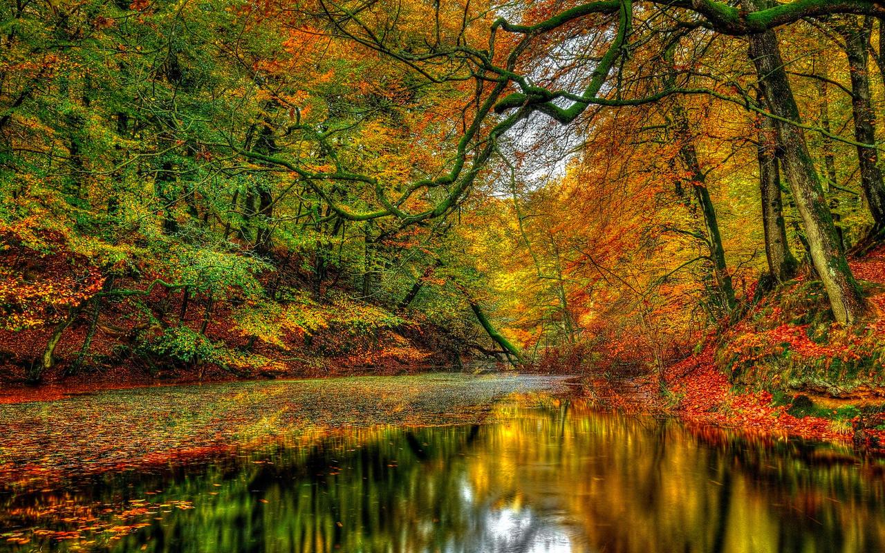 природа, осень, лес, деревья, речка, листья, небо,