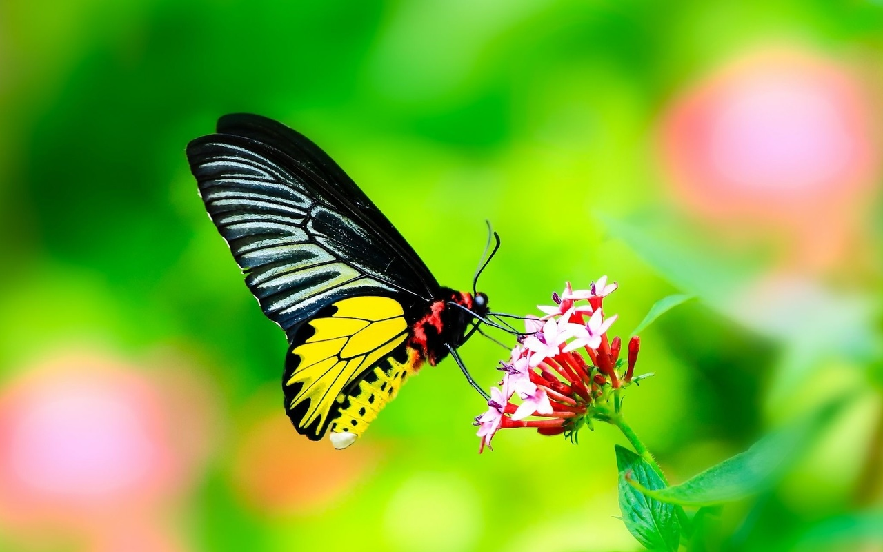макро, фото, тема, бабочка, цветок, природа, красиво