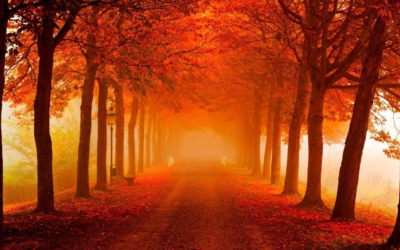 природа, осень, утро, красиво, деревья, аллея, дорога