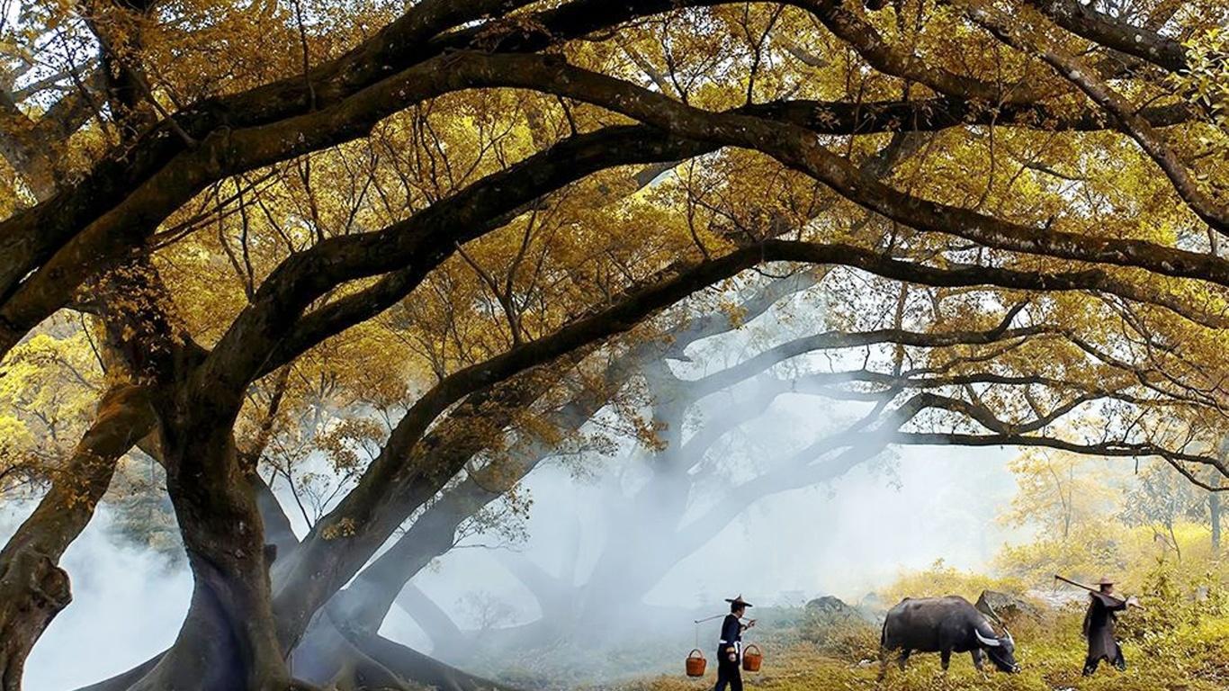 волшебная сказка осени, китай, природа