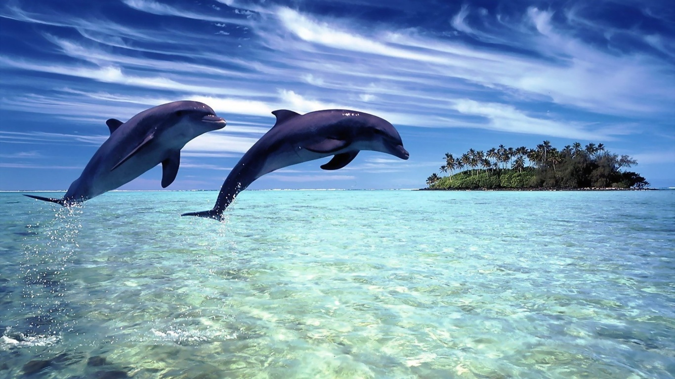 dolphin, ocean, water, sea, jump