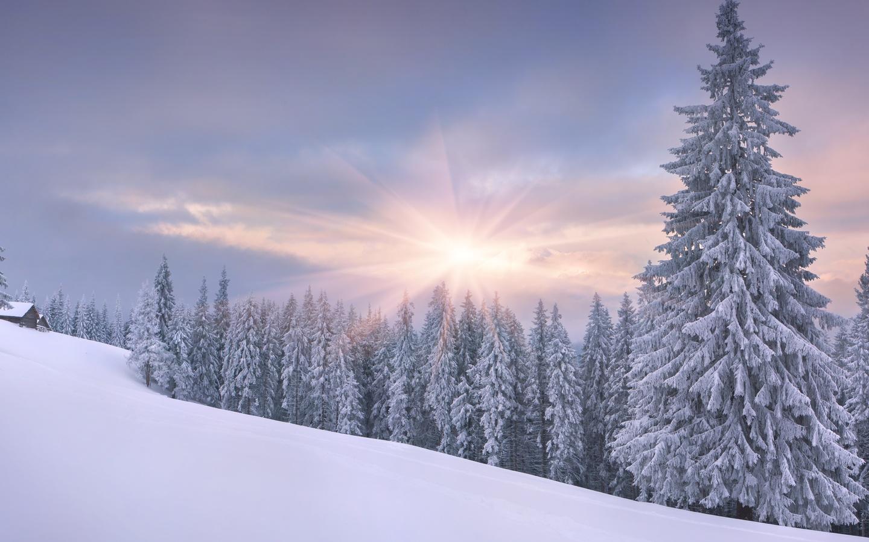 зима, природа, лес, домик, красиво, снег, небо, солнце