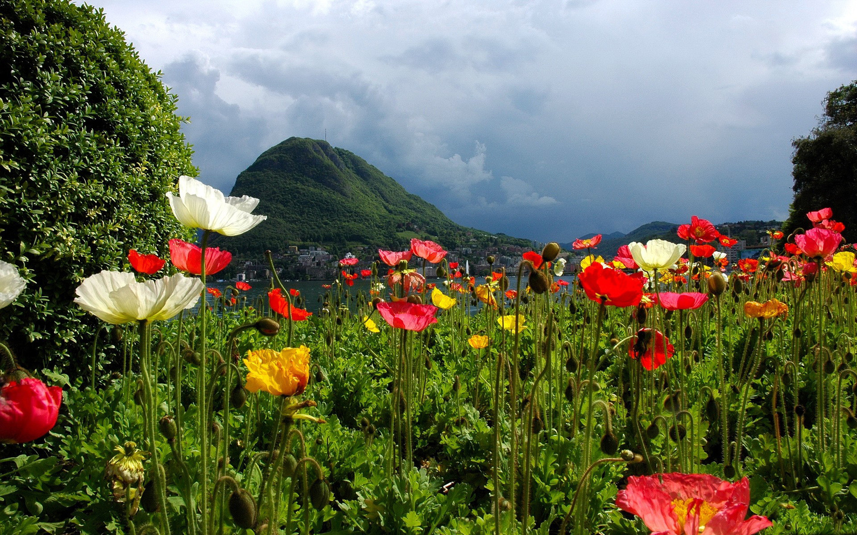 цветы, горы, курорт, природа, погода, пасмурно, город, красиво, залив