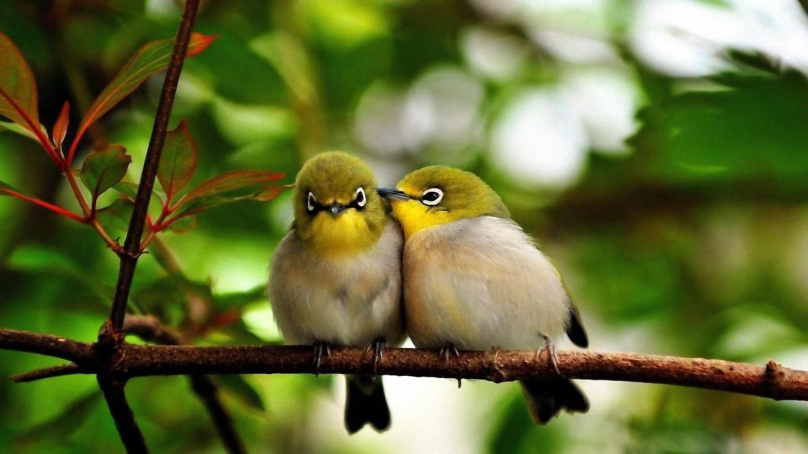 Доброе утро картинки красивые с птицами, тренеру днем рождения