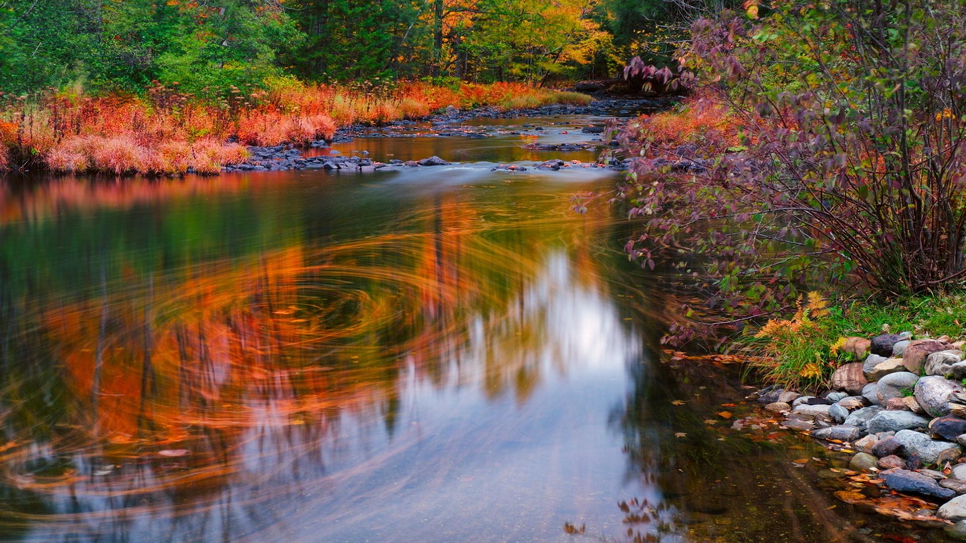 осень, ручей, камни, водоворот, деревья, лес, красота, природа