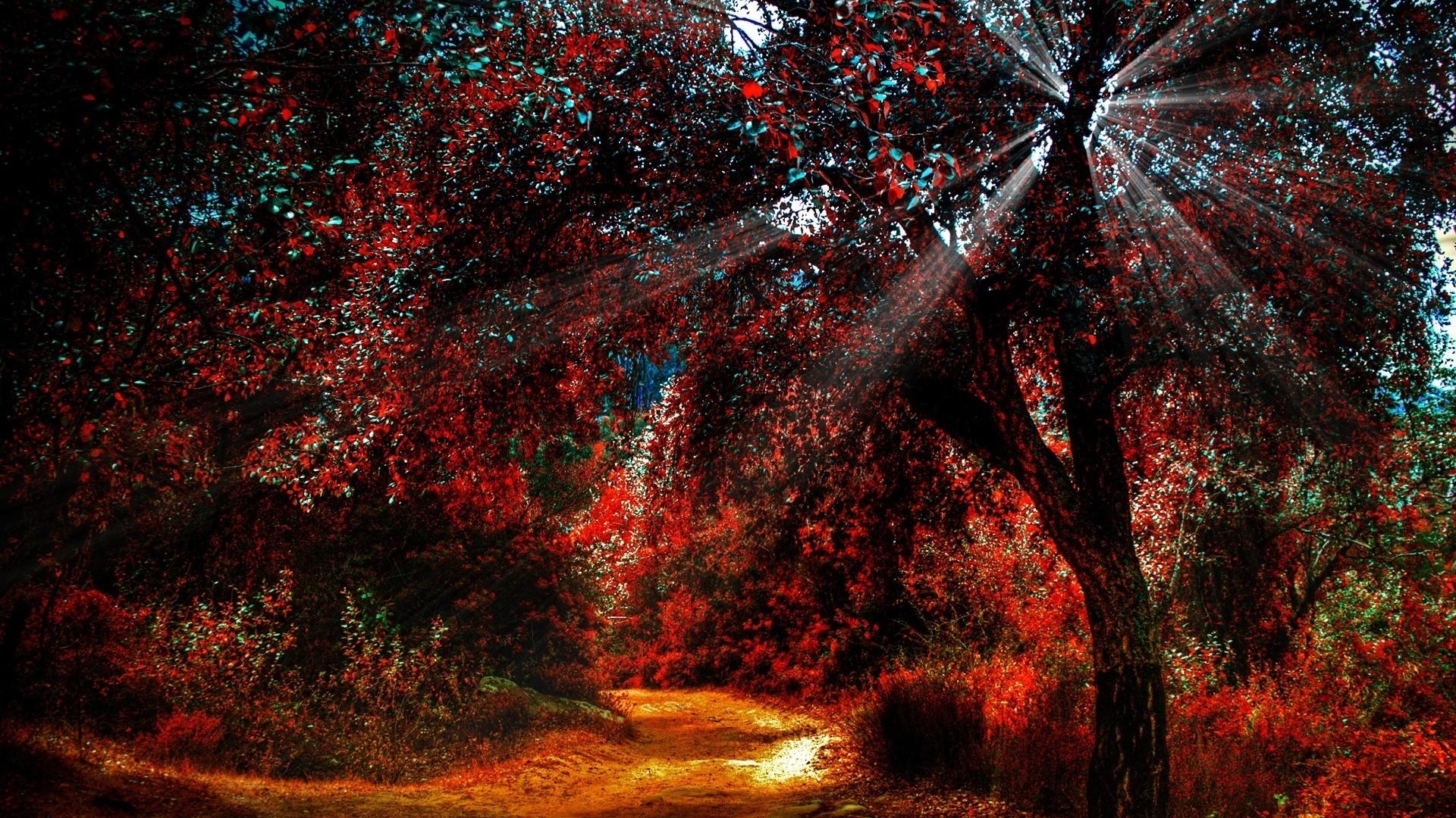 forest, autumn, tree, sunlight, ray of light, небо, природа