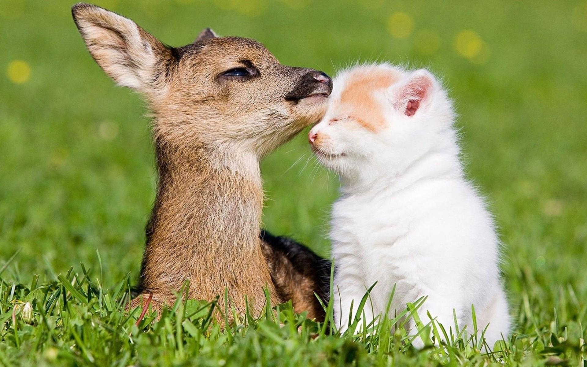 Прикольные картинки про животных и любовь