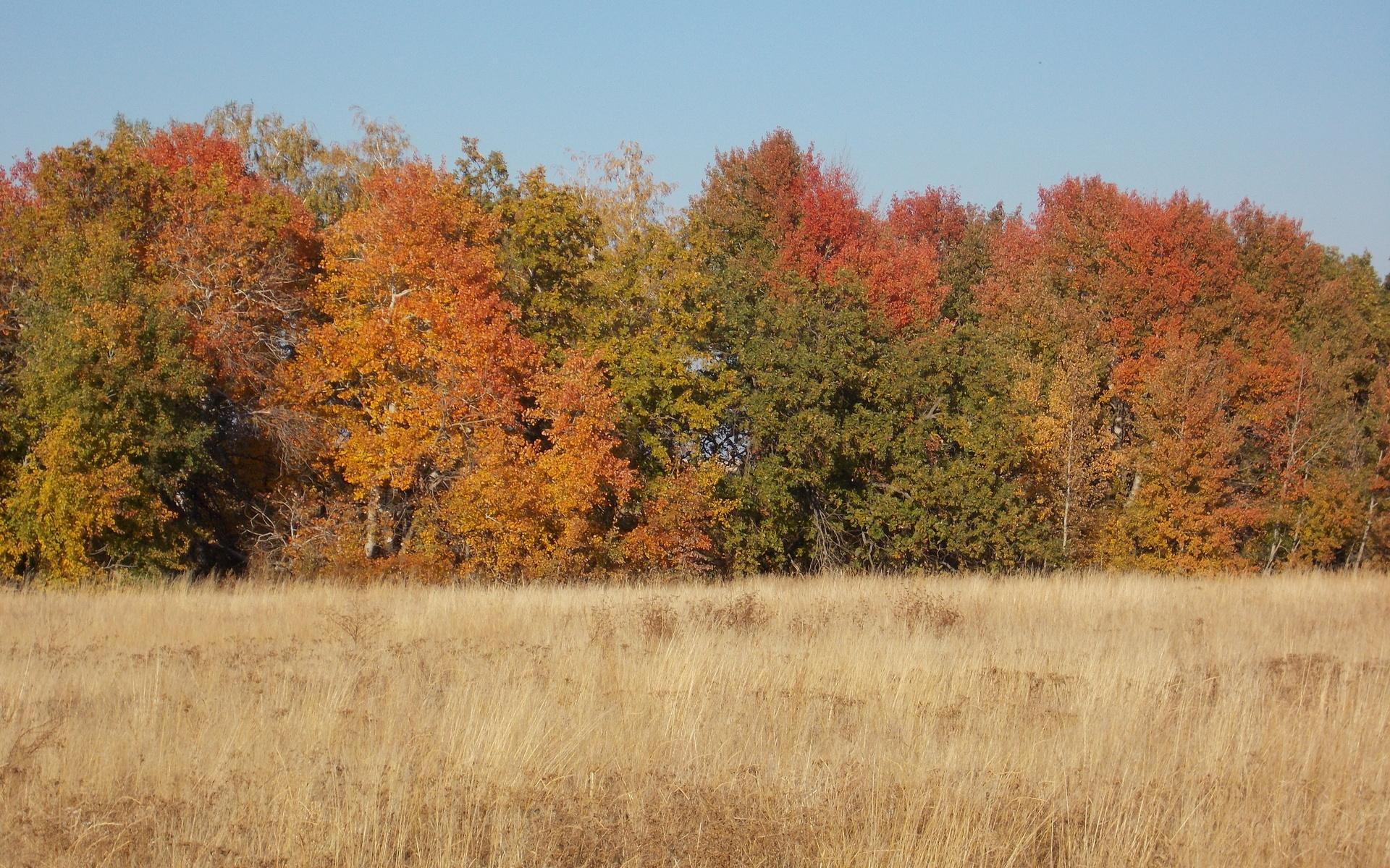 осень, деревья, поле,небо, природа