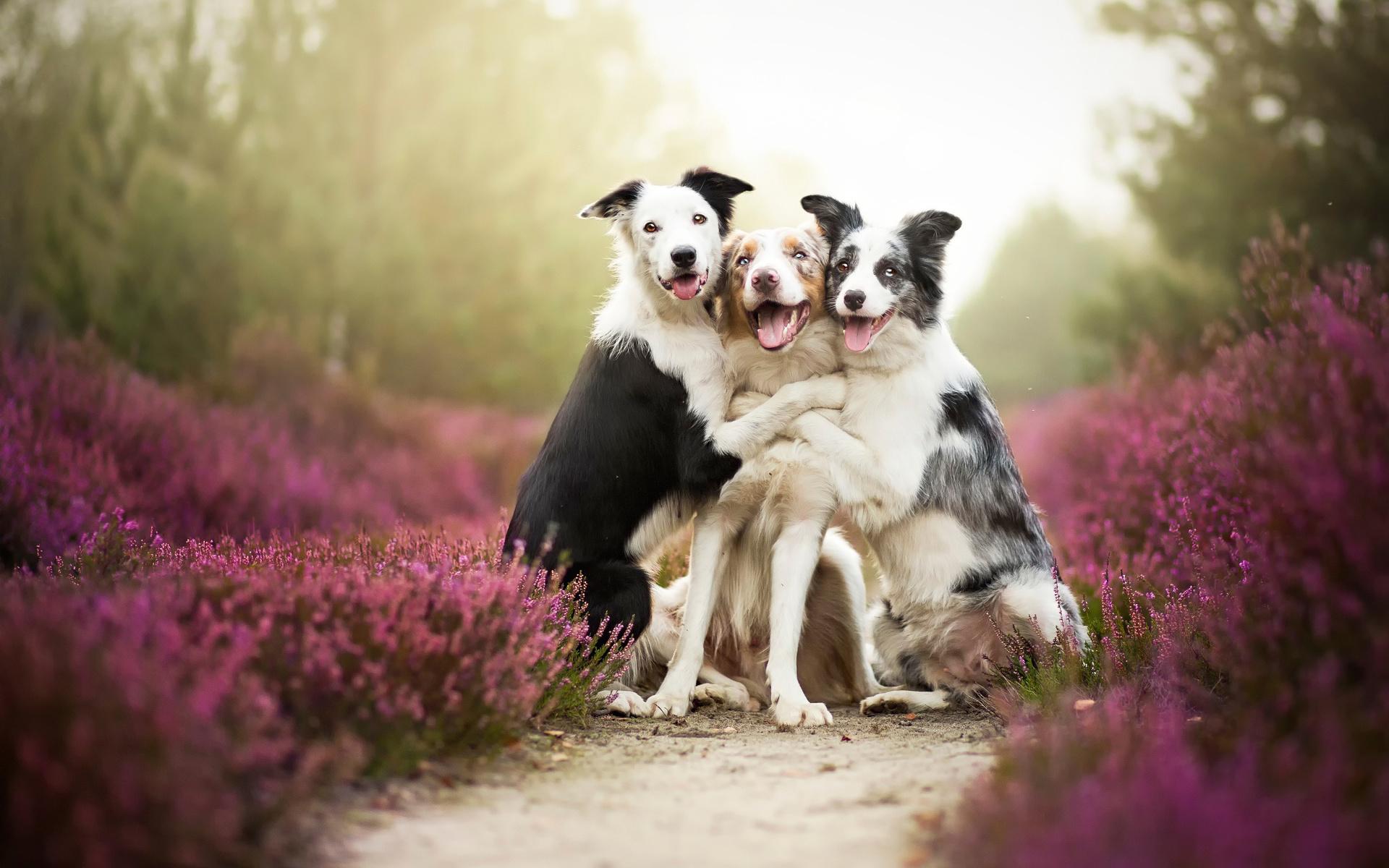 Открытки, открытка друг собака