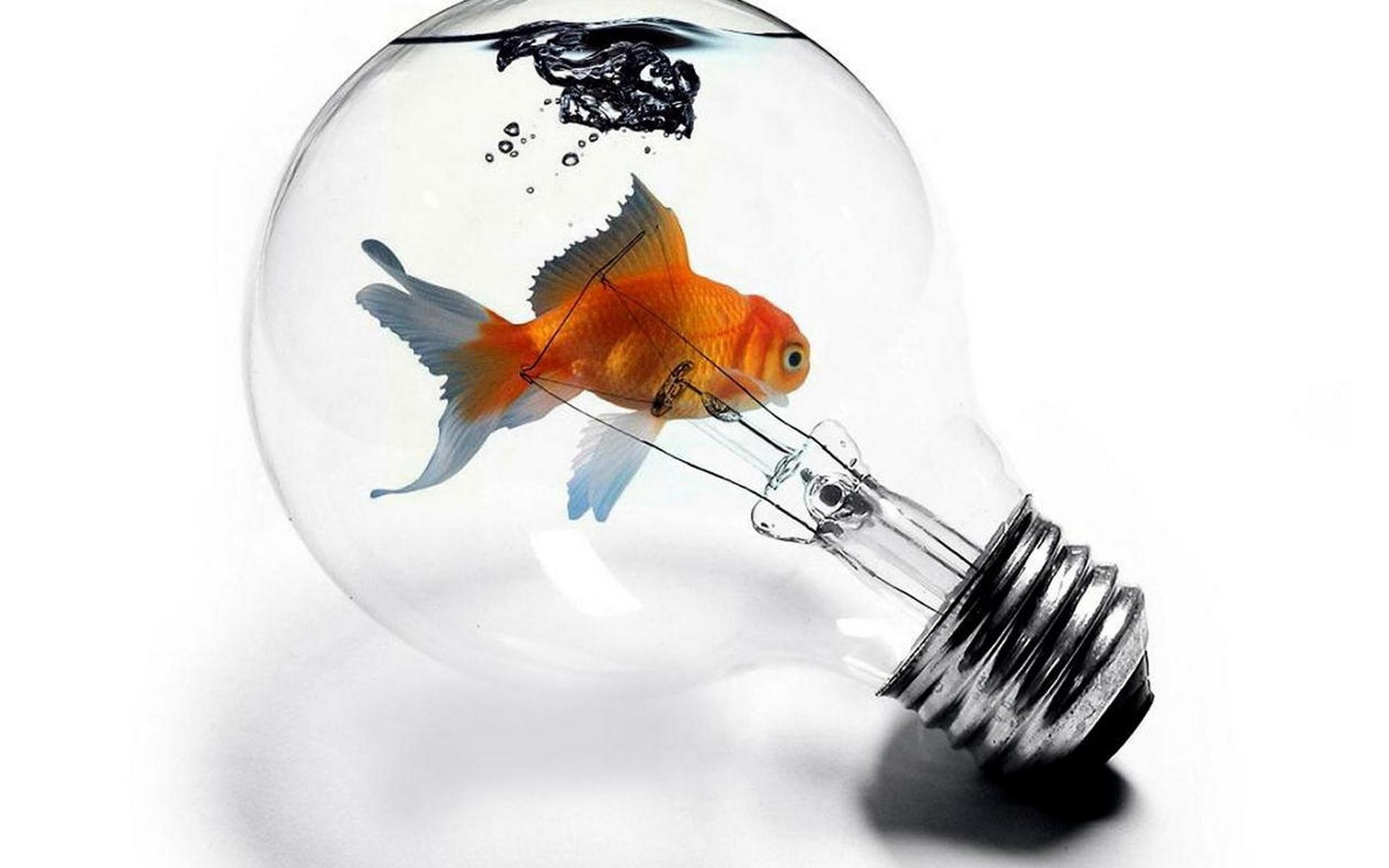 лампочка-аквариум, рыбка, 3d