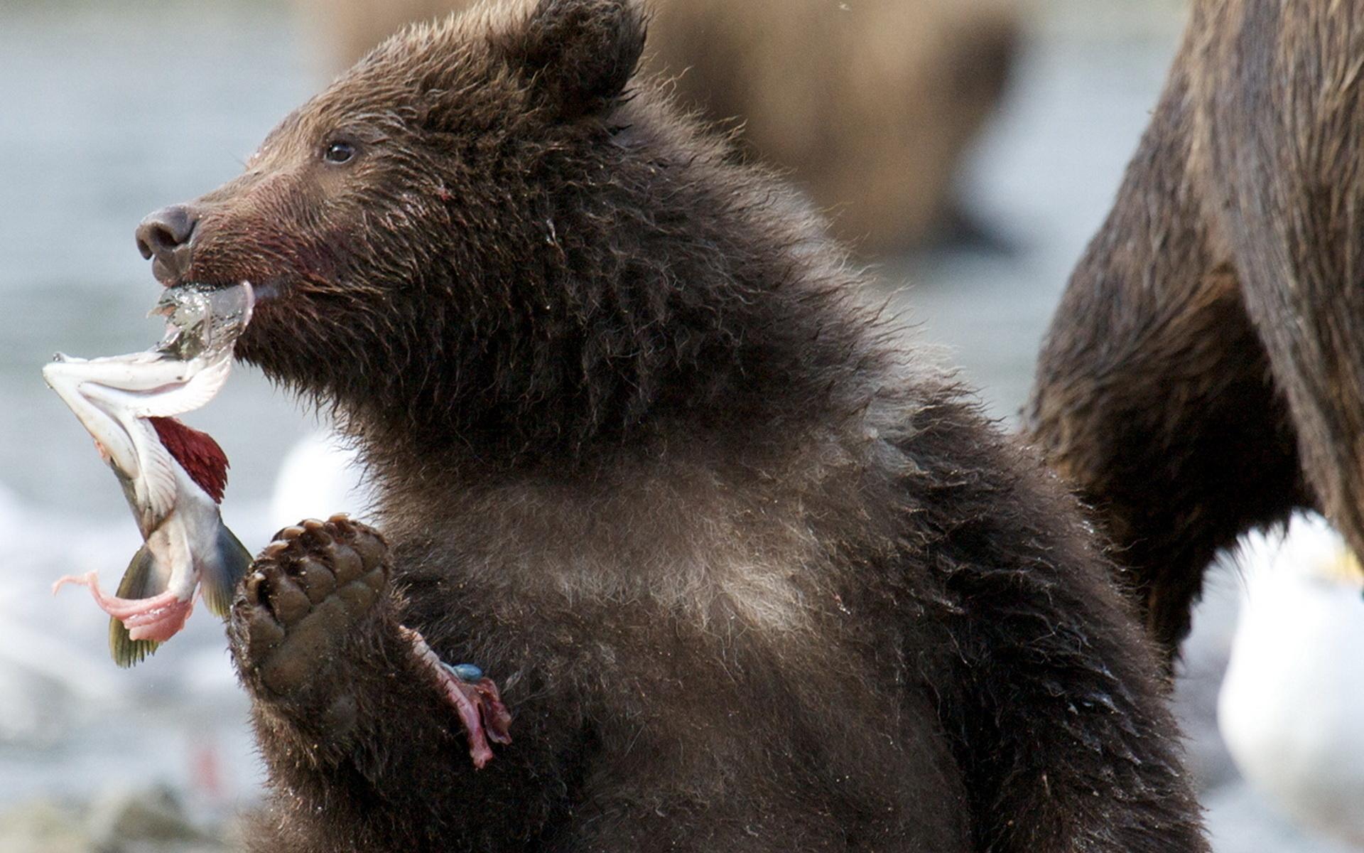 медвежонок, рыбалка, красота