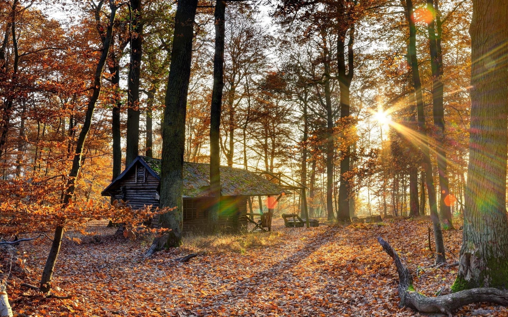 природа, осень, домик, отдых, охота, лес, красиво, свет, солнца, небо,