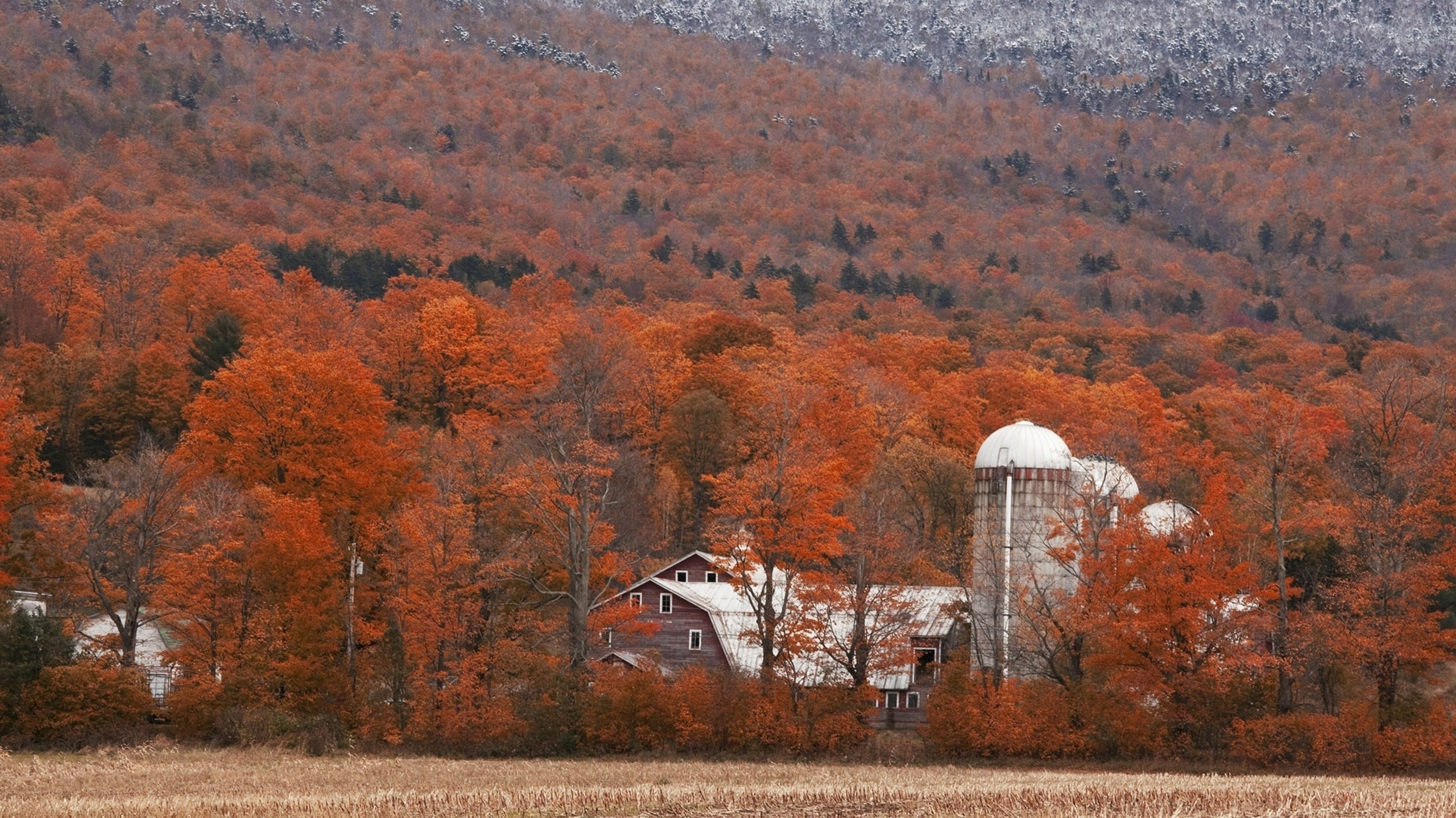 растительность, постройки, поле, осень, природа