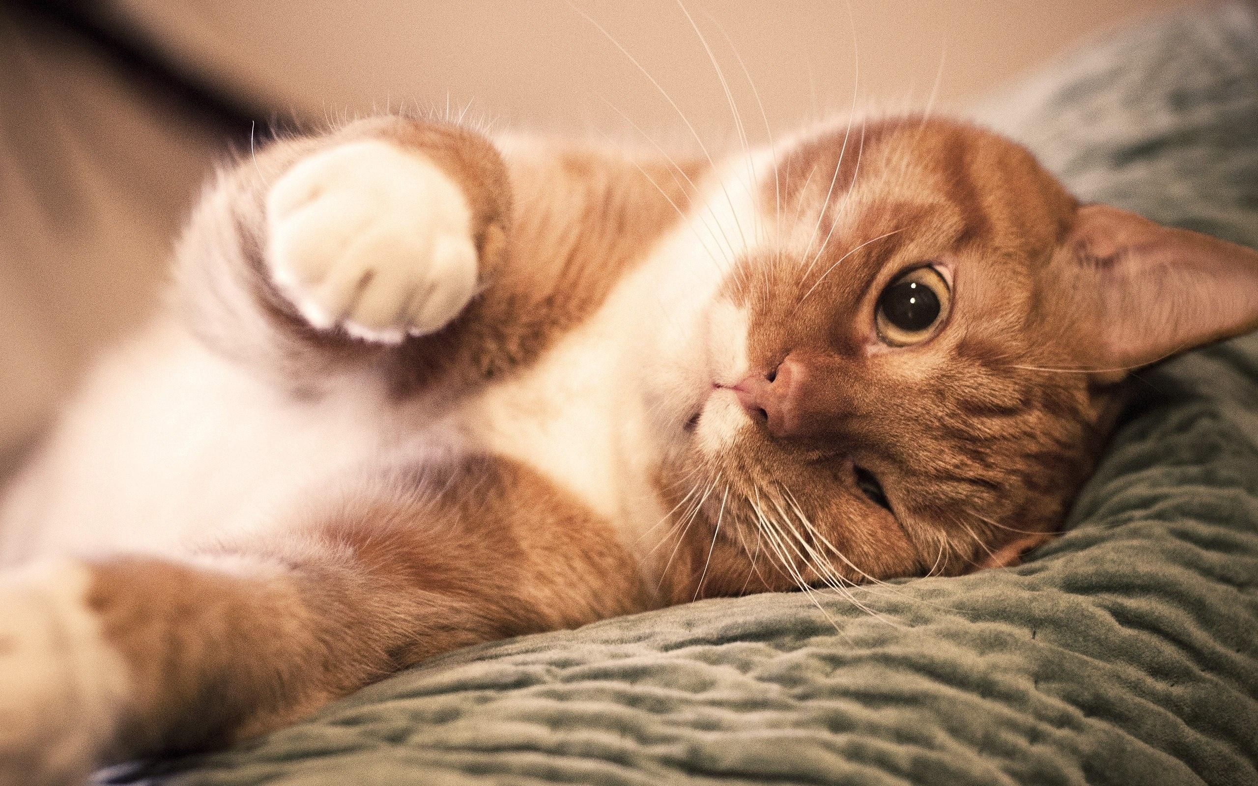 Картинка с котиком, картинки надписями
