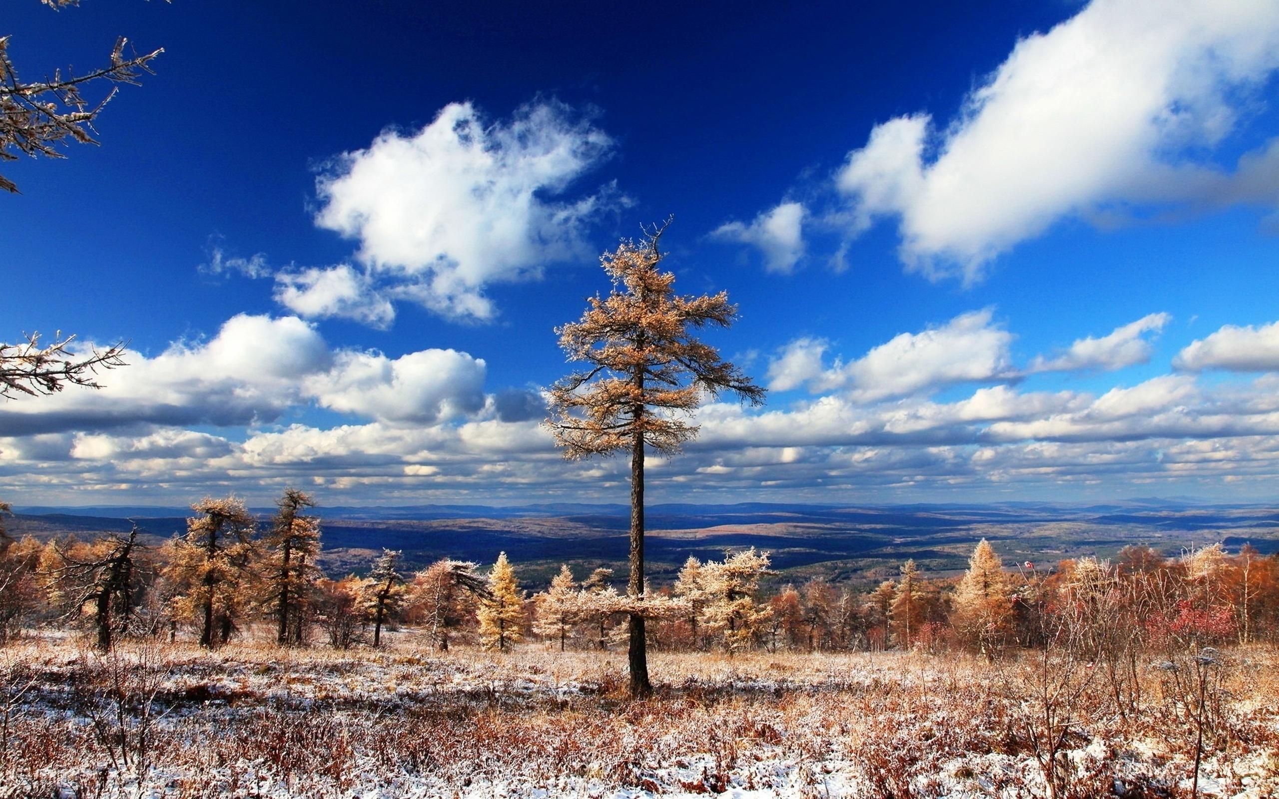 облака, горизонт, деревья, земля, припорошенная снегом, начало зимы, небо, природа