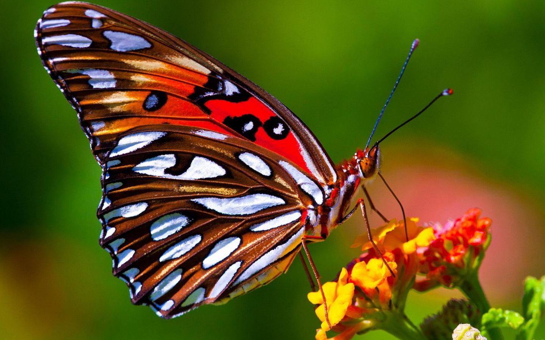 Мама, бабочка прикольная картинки