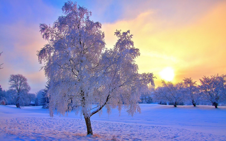 зима, природа, деревья, зима, поселок, снег, красиво, свет, солнца