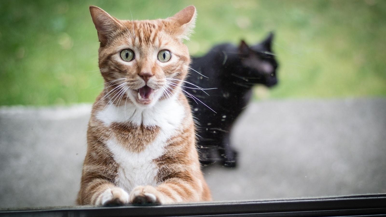 Прикольные картинки в котами, привет