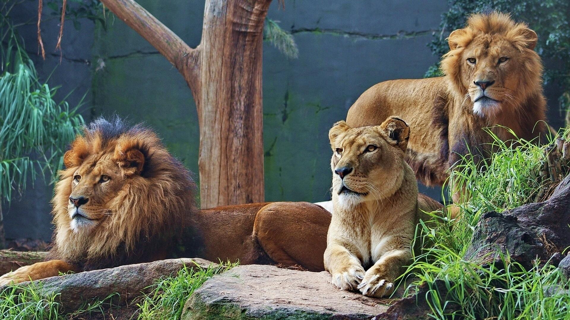 хищники в зоопарке