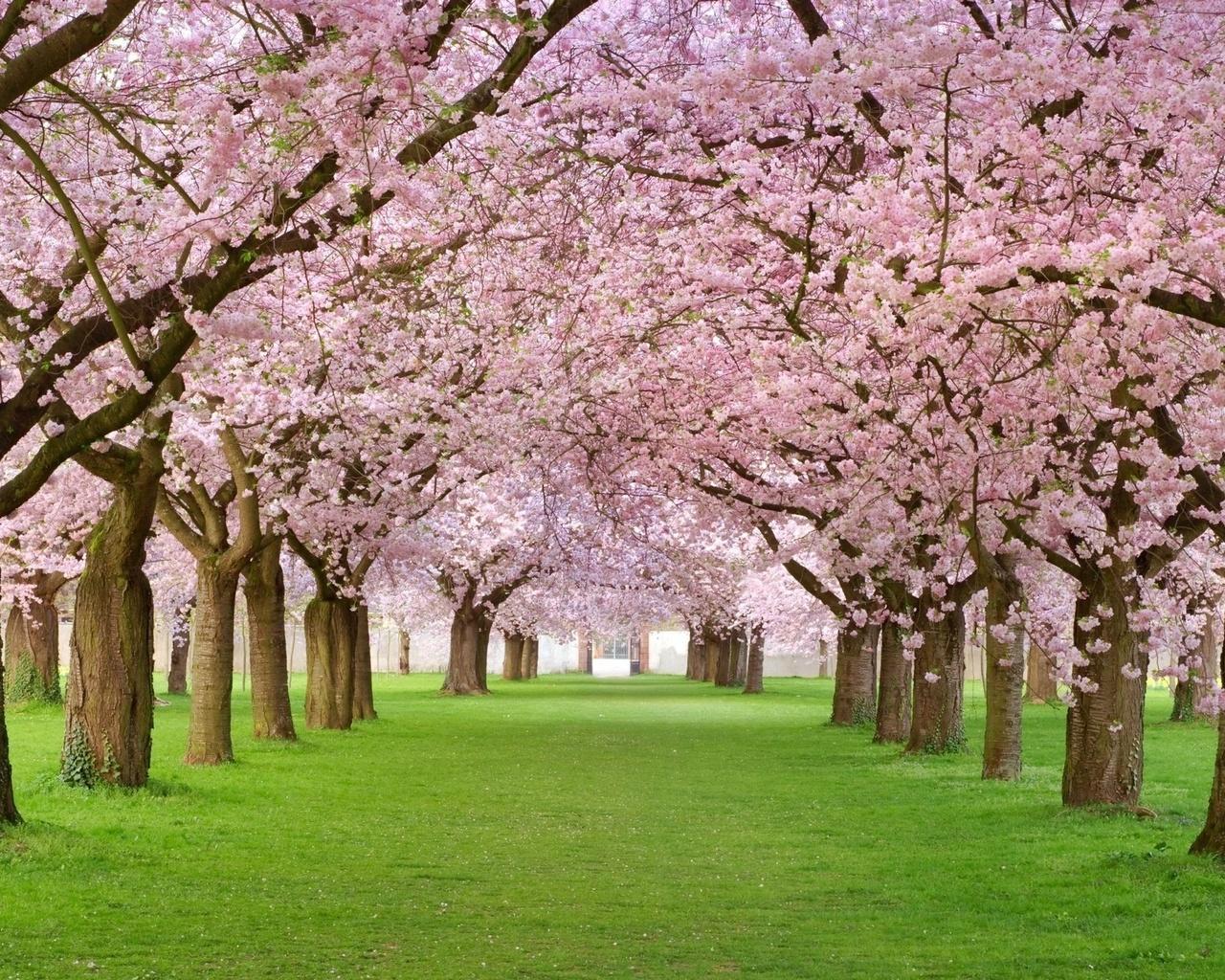 весна, природа, парк, красиво, позитивно